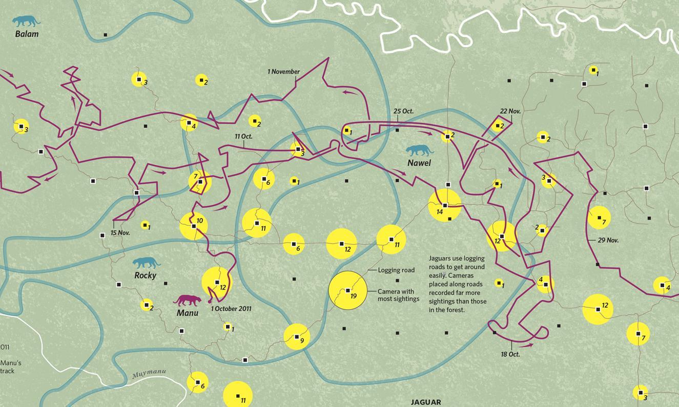 Where the animals go: wildlife tracking secrets revealed