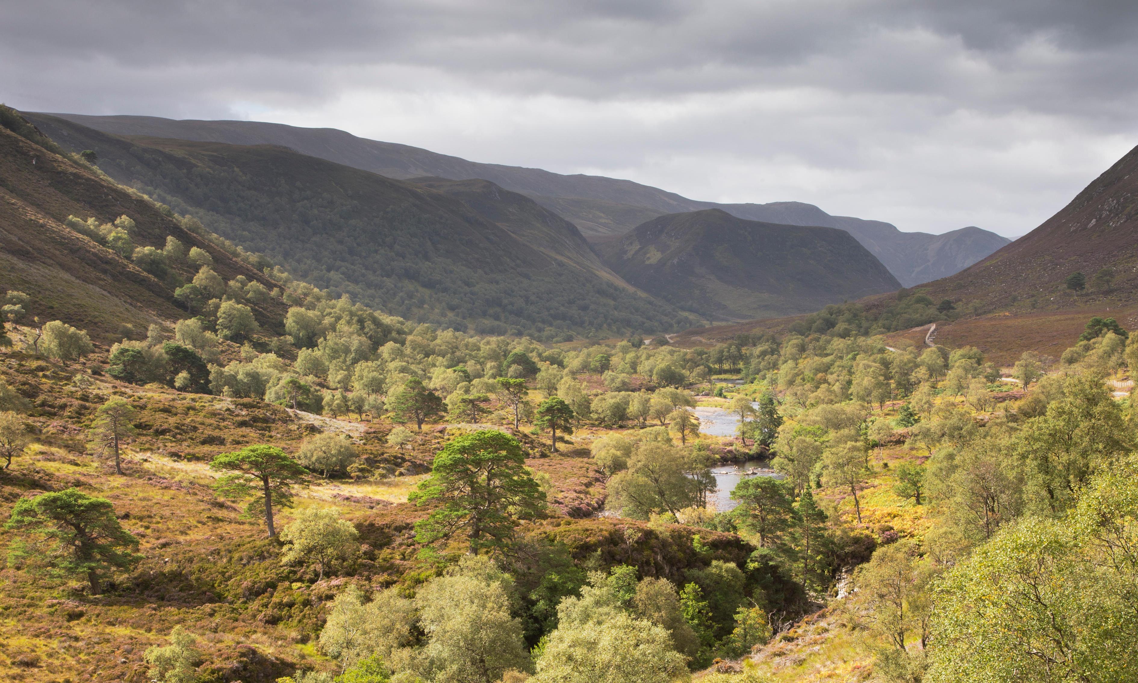 Rewild a quarter of UK to fight climate crisis, campaigners urge