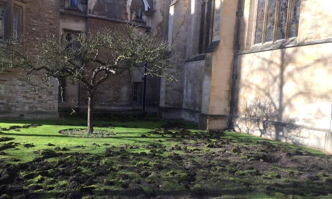 Extinction Rebellion protesters dig up Cambridge college lawn