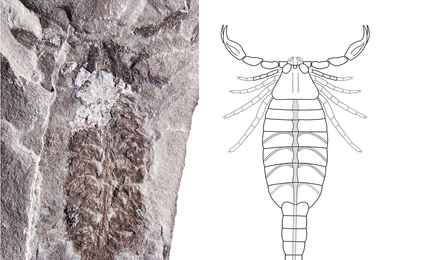 Ancient fossil 'may prove scorpion was first land-dwelling animal'