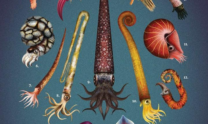Artist resurrects obscure fossils in gorgeous living colour