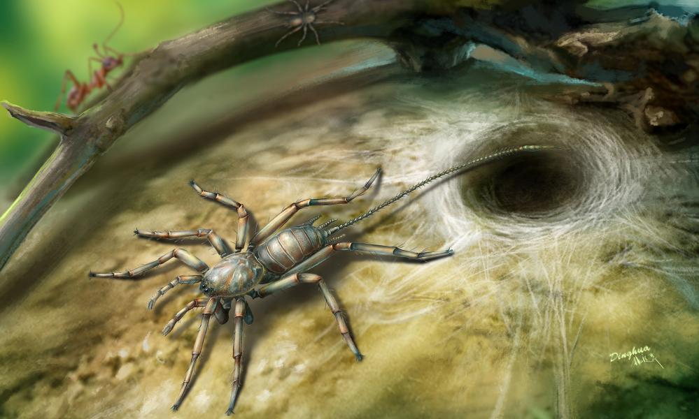 An illustration of the Cretaceous arachnid Chimerarachne yingi found in Myanmar.