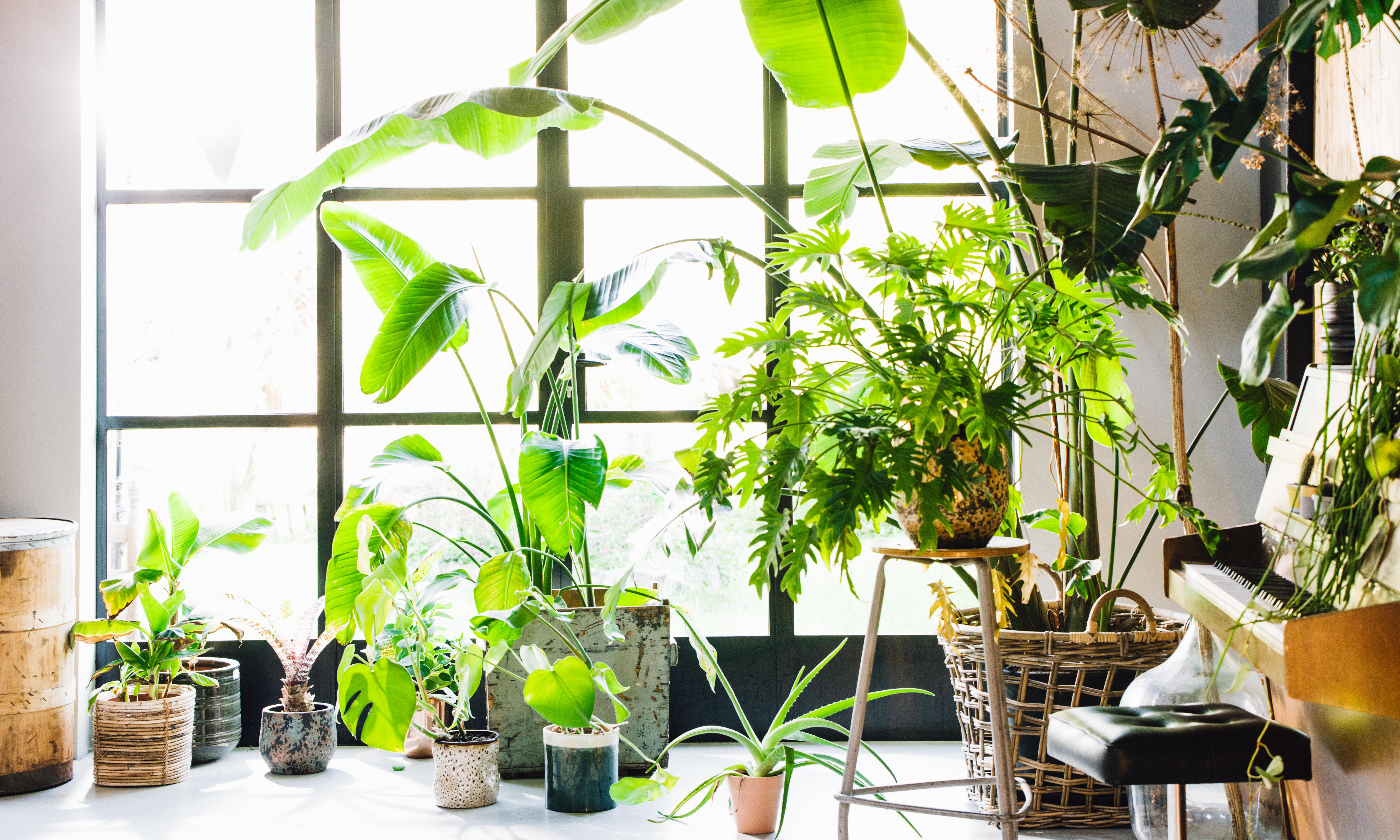 How to grow houseplants fit for the Chelsea flower show