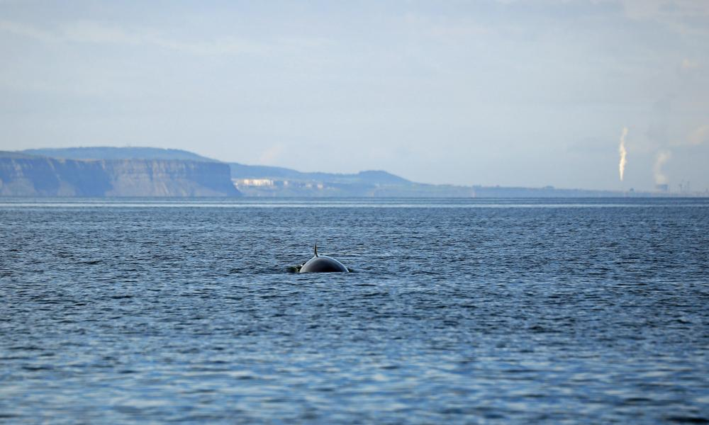 A minke whale roams the North Yorkshire coastline, with Redcar steel plant in the background