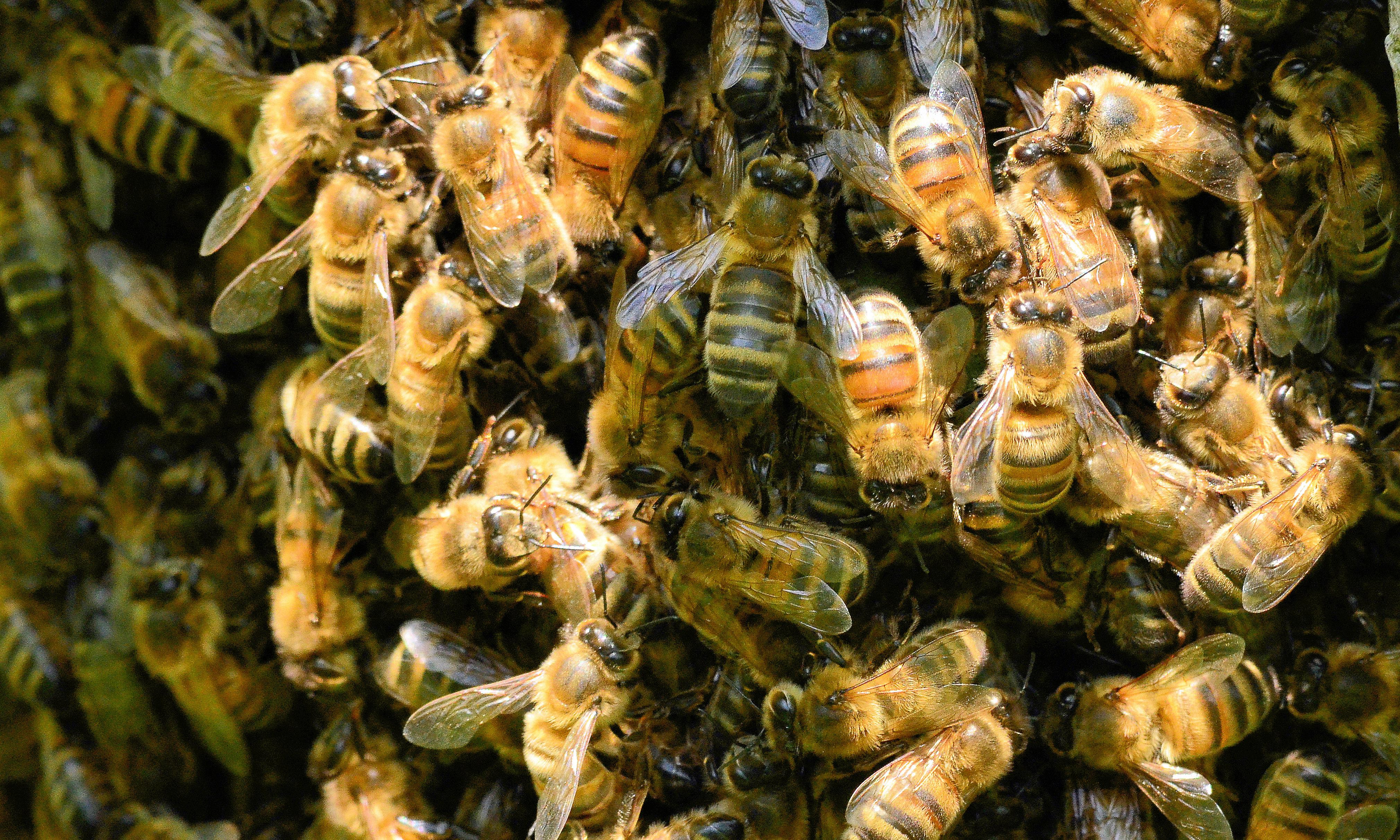 Berlin's bumbling beekeepers leave swarms without homes