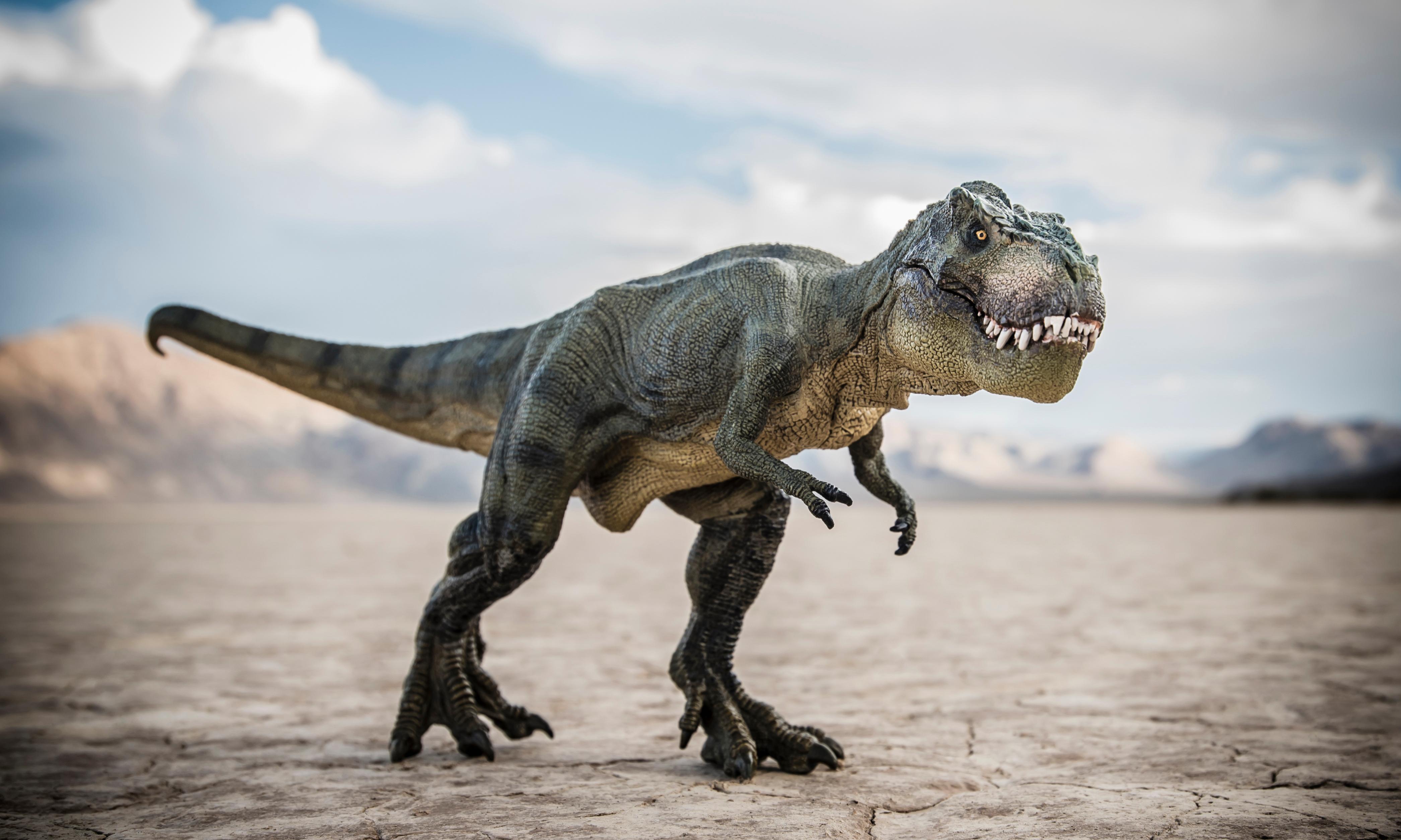 Baby T rex goes on sale on eBay, sparking paleontologists' outcry
