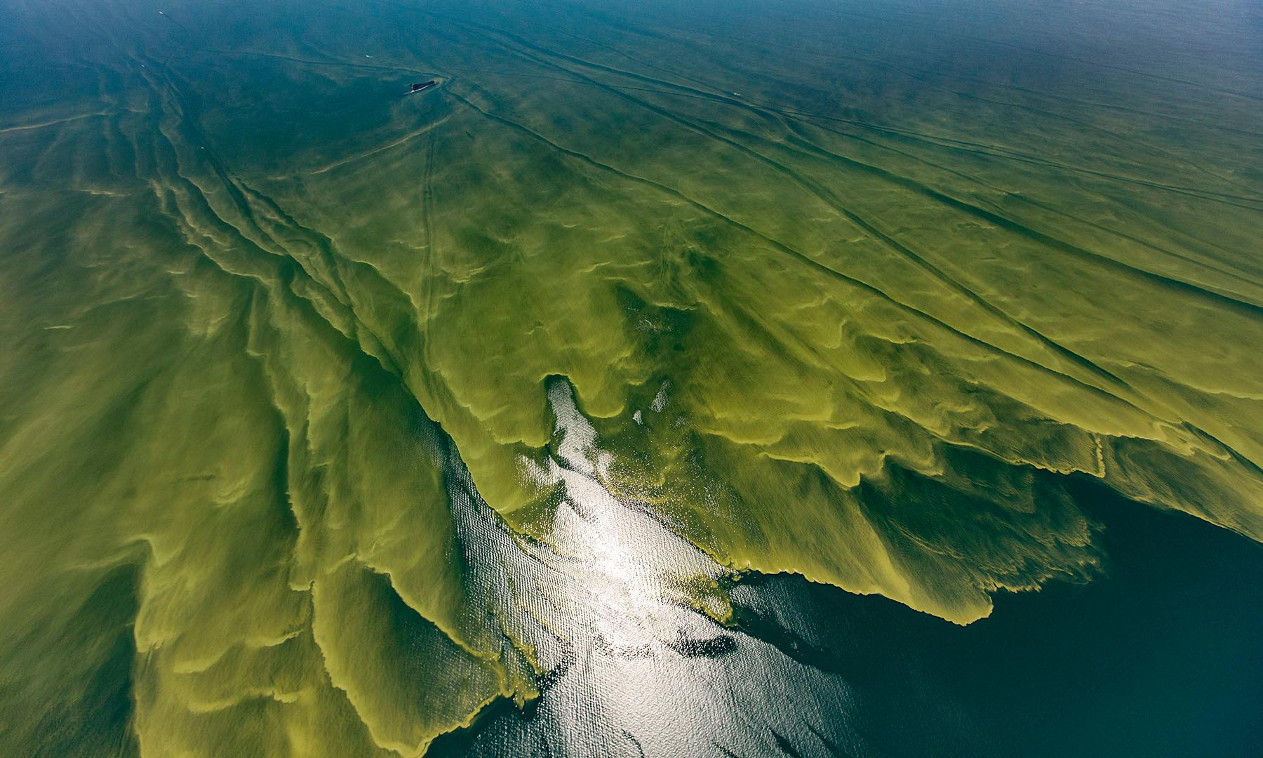 Lethal algae blooms – an ecosystem out of balance