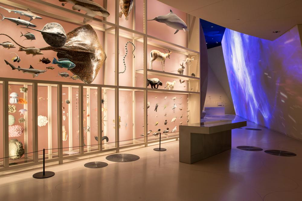 Looping galleries … inside the museum.