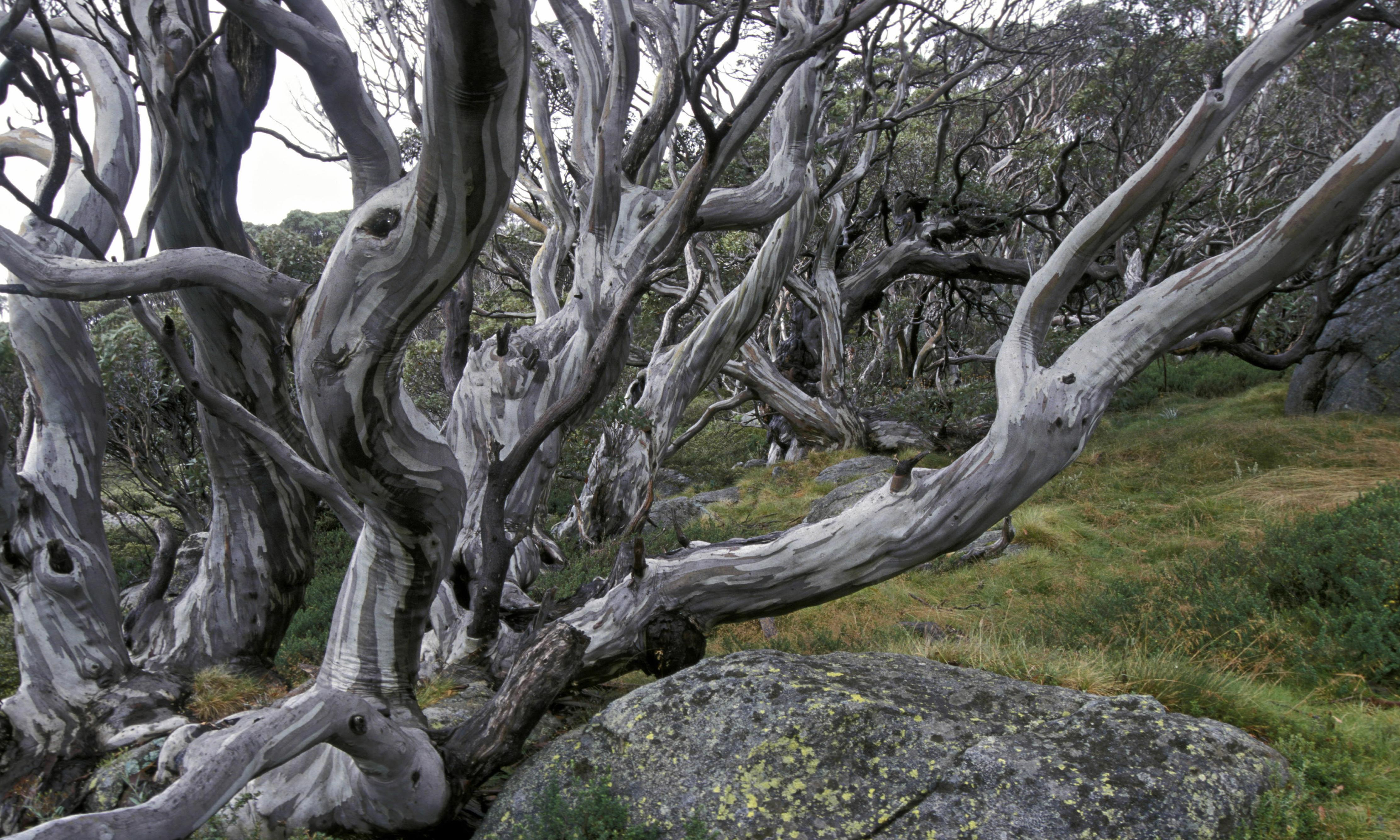 Ornamentally barking up the right tree