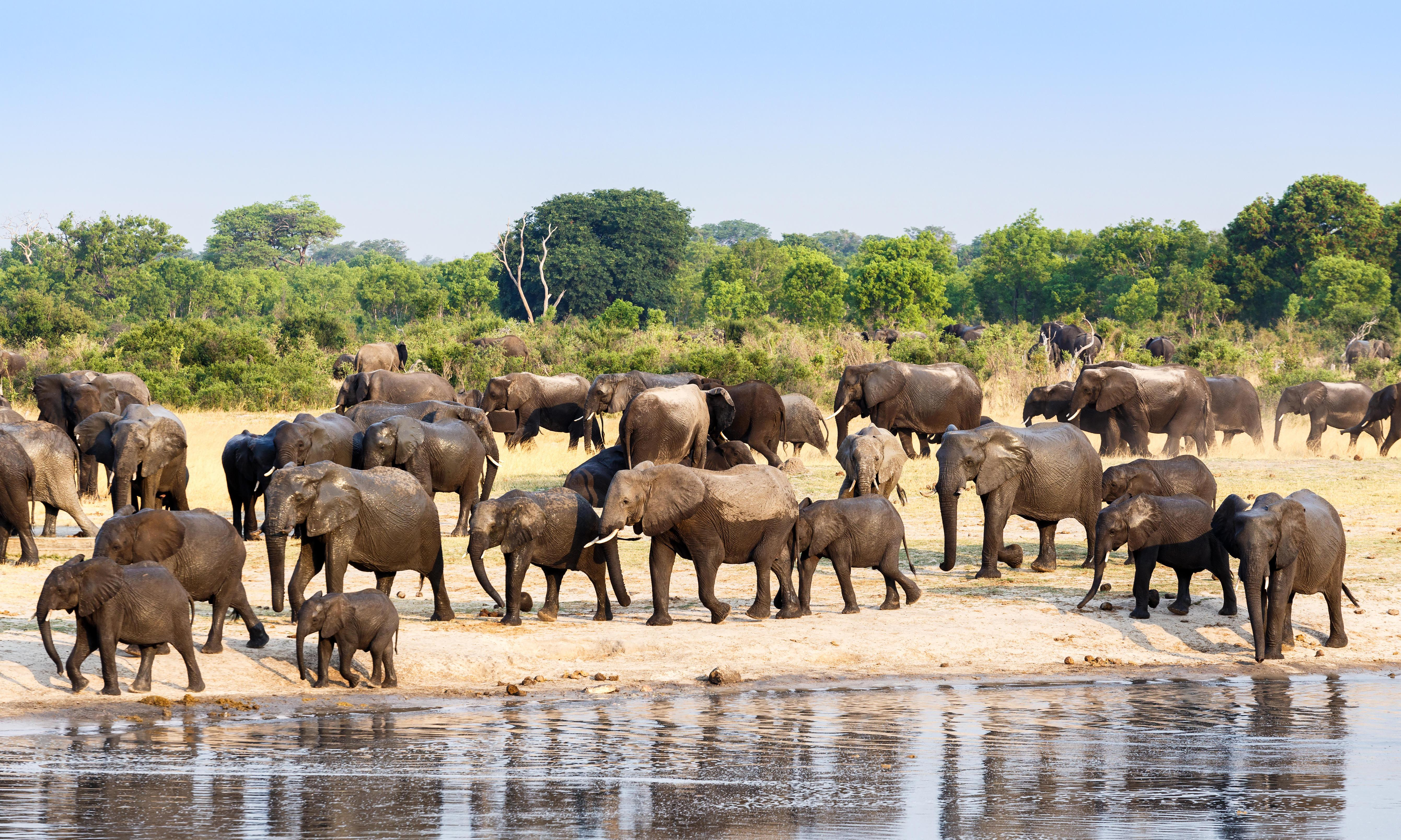 Bid for strongest protection for all African elephants defeated at wildlife summit