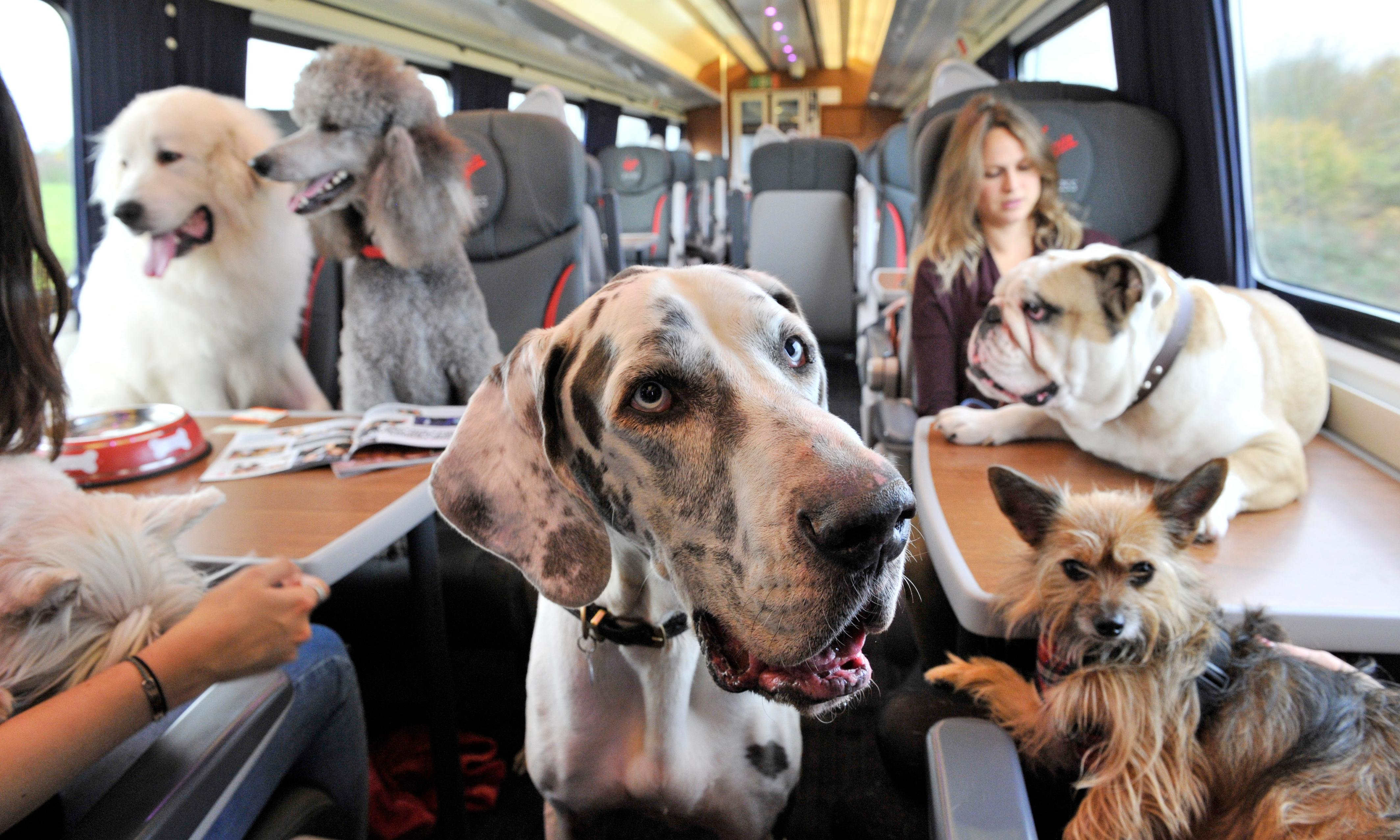 I won't stand for this dogs-on-train-seats nonsense