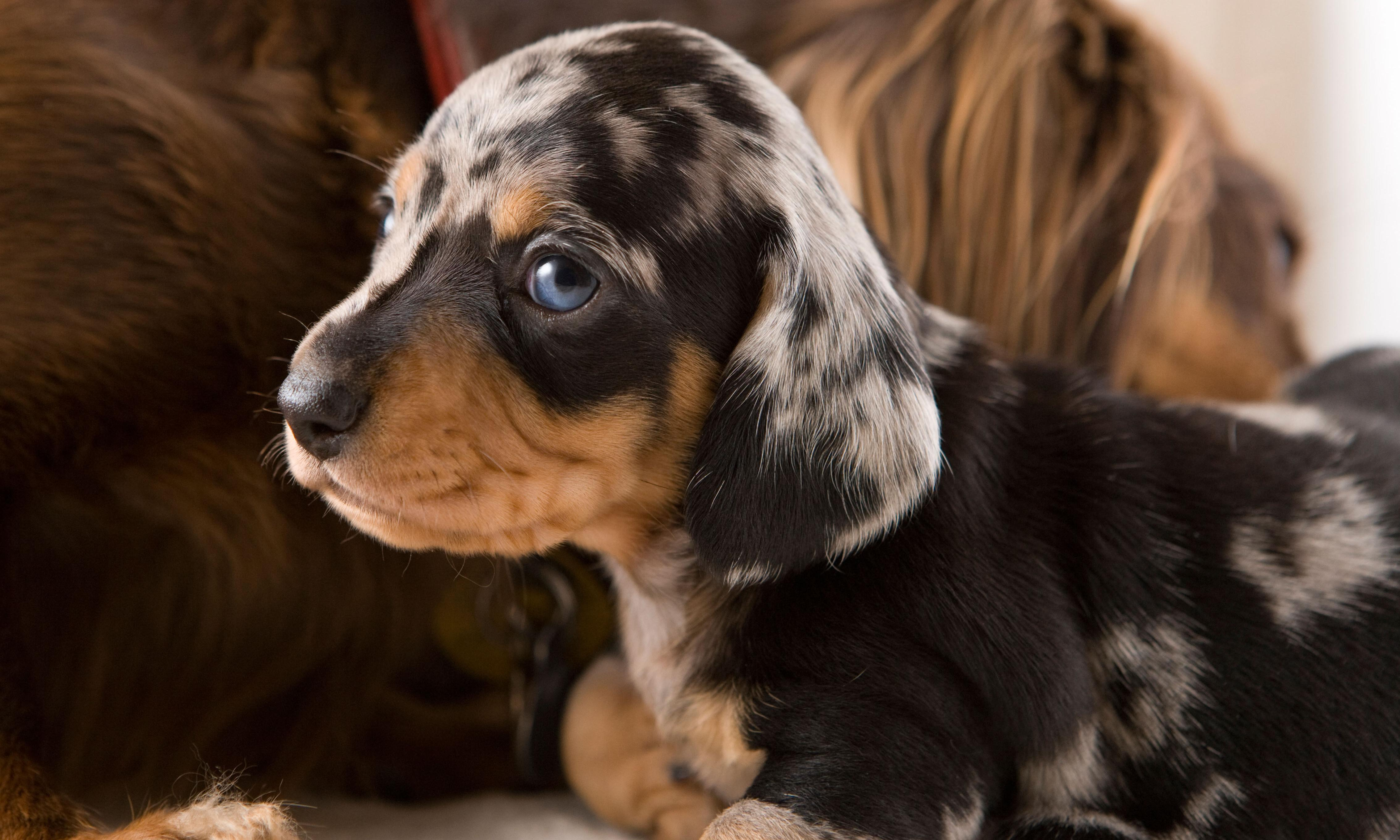 Dogs mirror stress levels of owners, researchers find