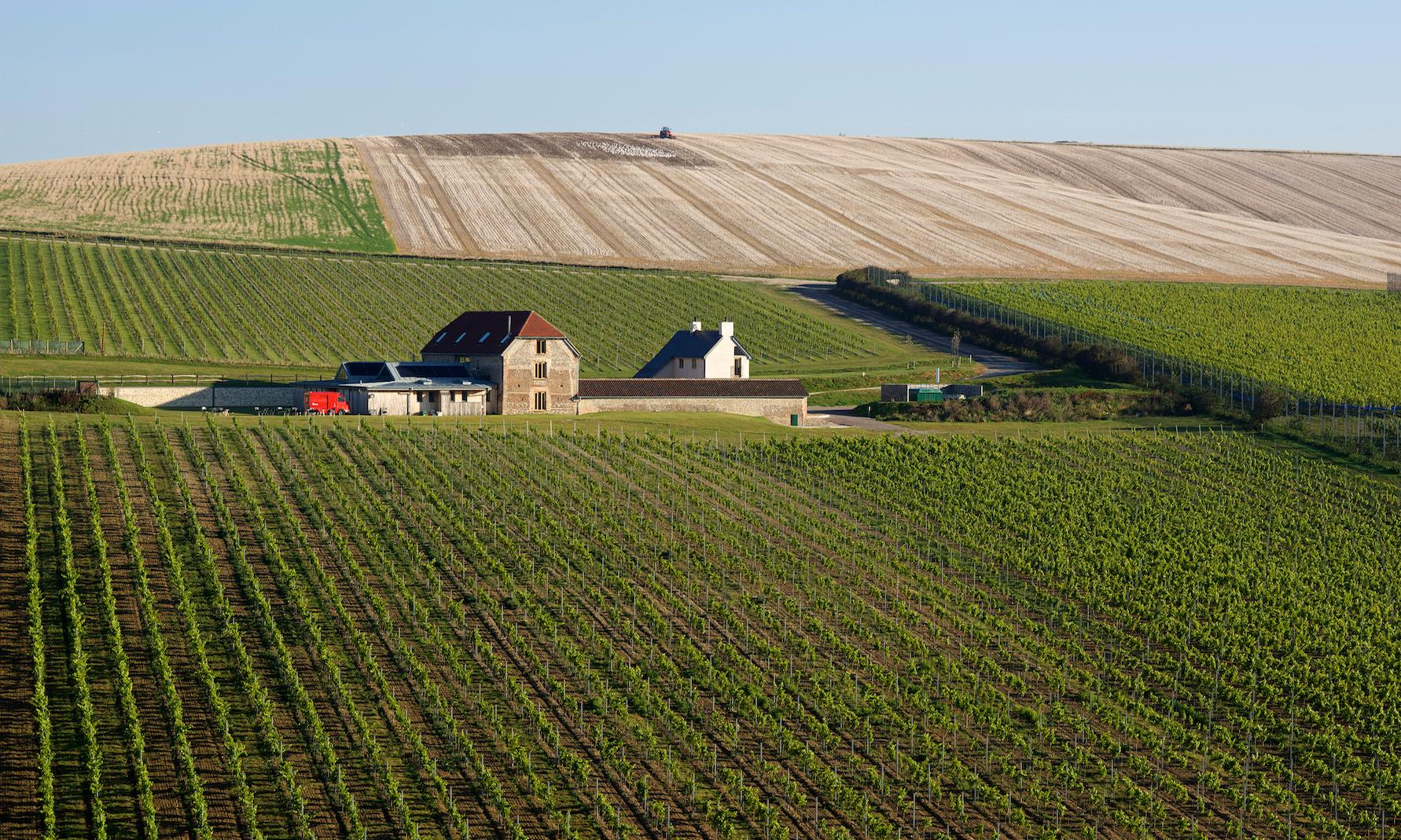 Top 10 vineyard stays in the UK and Europe – to visit by train