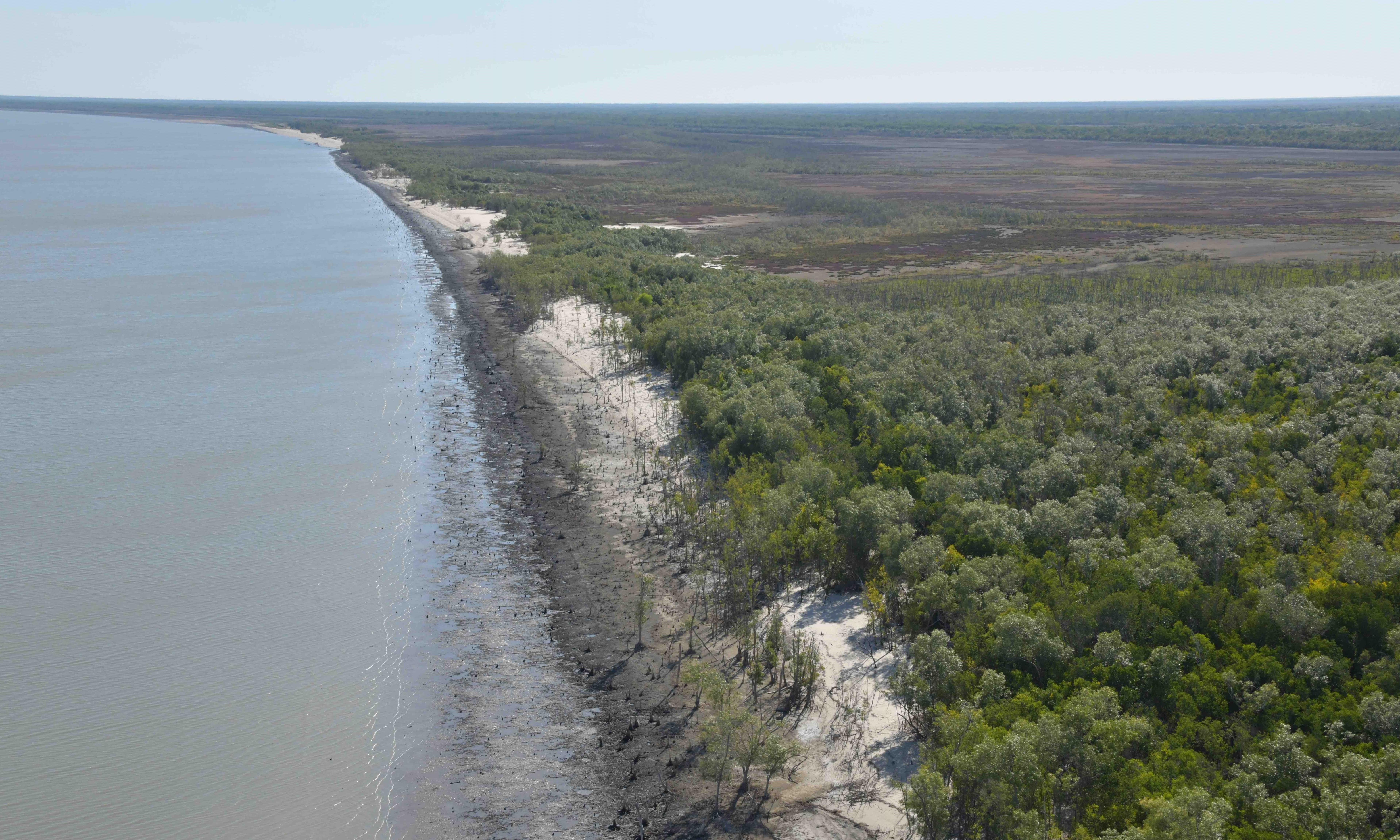 Shocked scientists find 400km of dead and damaged mangroves in Gulf of Carpentaria