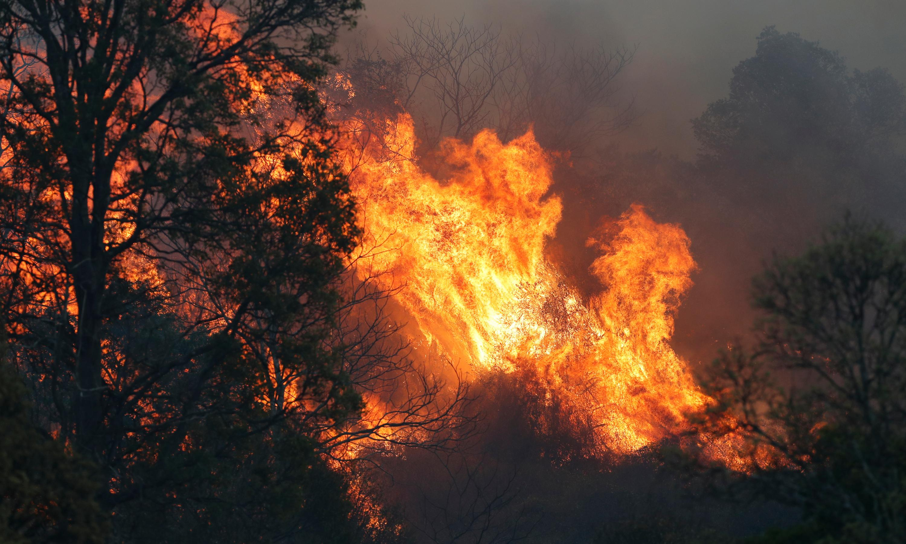 Bushfires: more than 20 homes lost as more than 70 blazes rage in Queensland and NSW