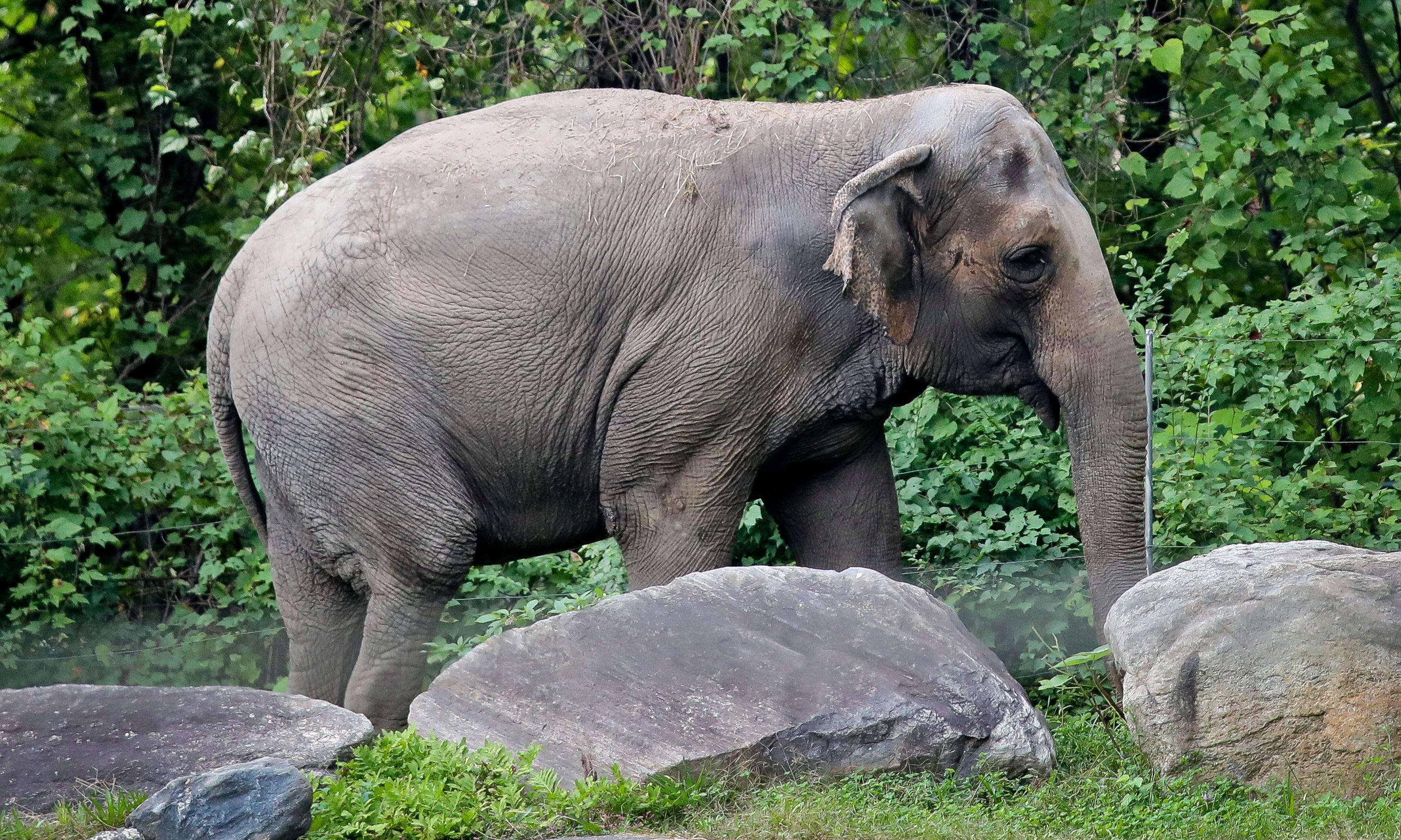 Lawyers argue Happy the elephant should have the same rights as humans