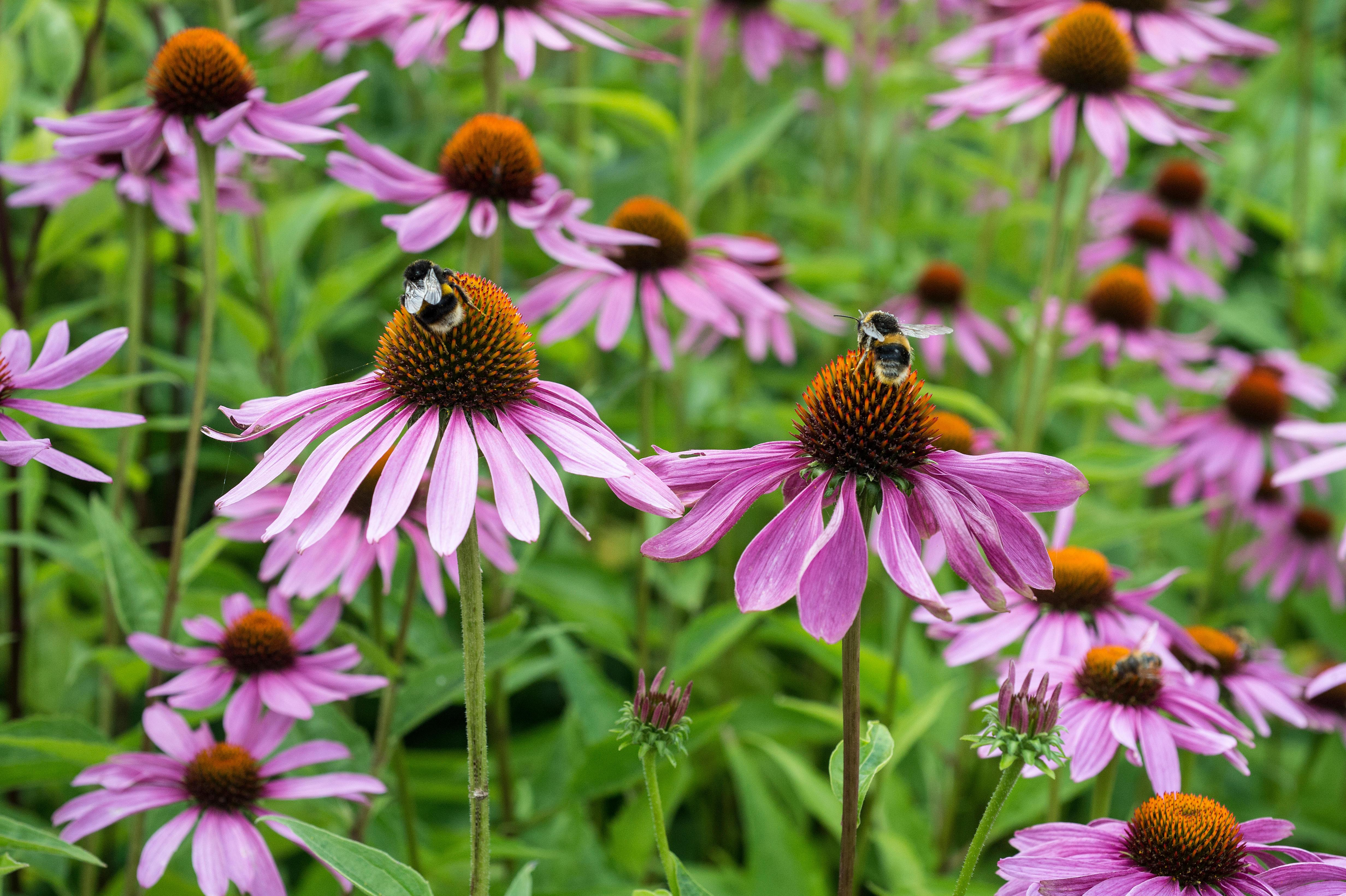 Create a buzz: how to help save wild bees – even if you don't have a garden