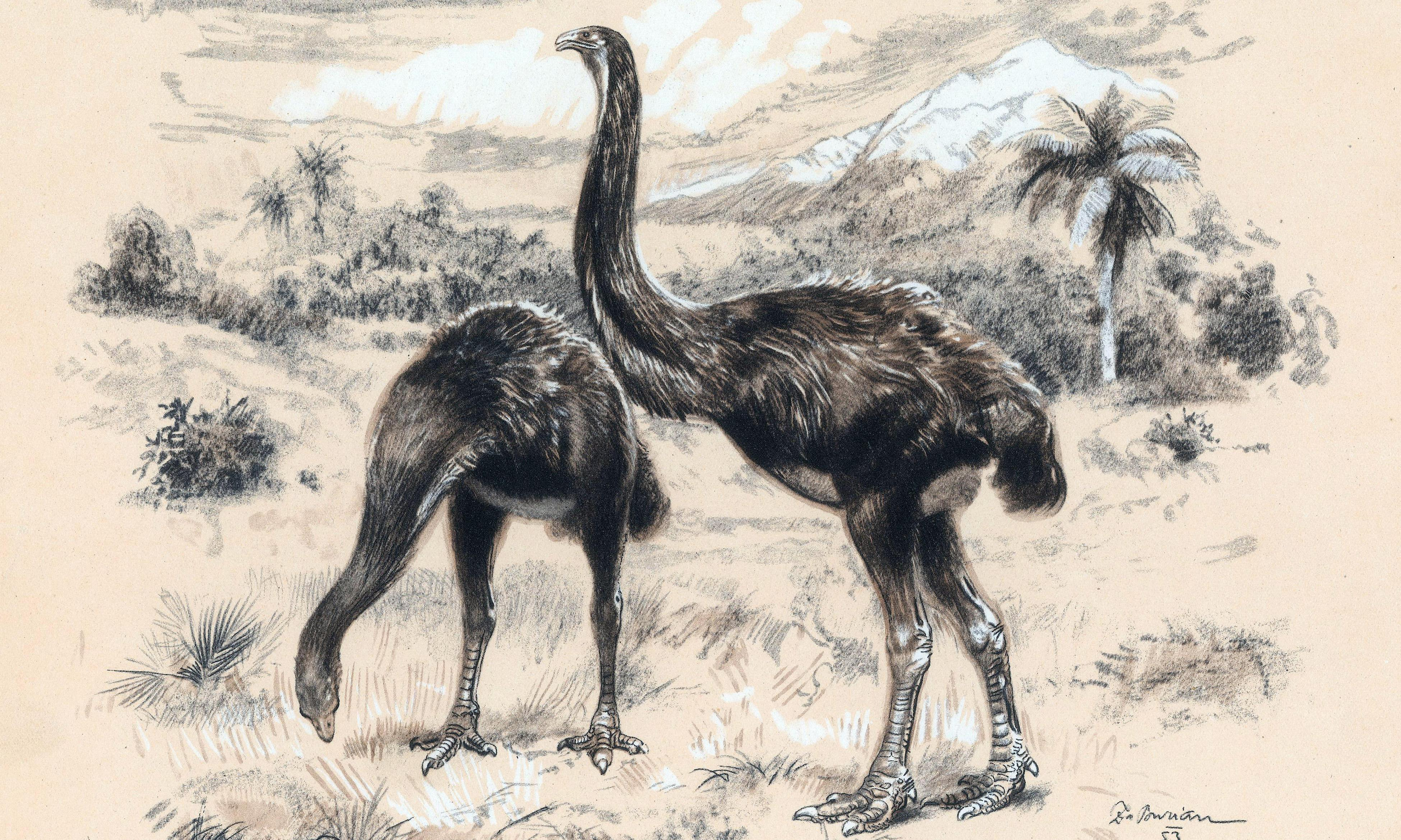Moa for sale: trade in extinct birds' bones threatens New Zealand's history
