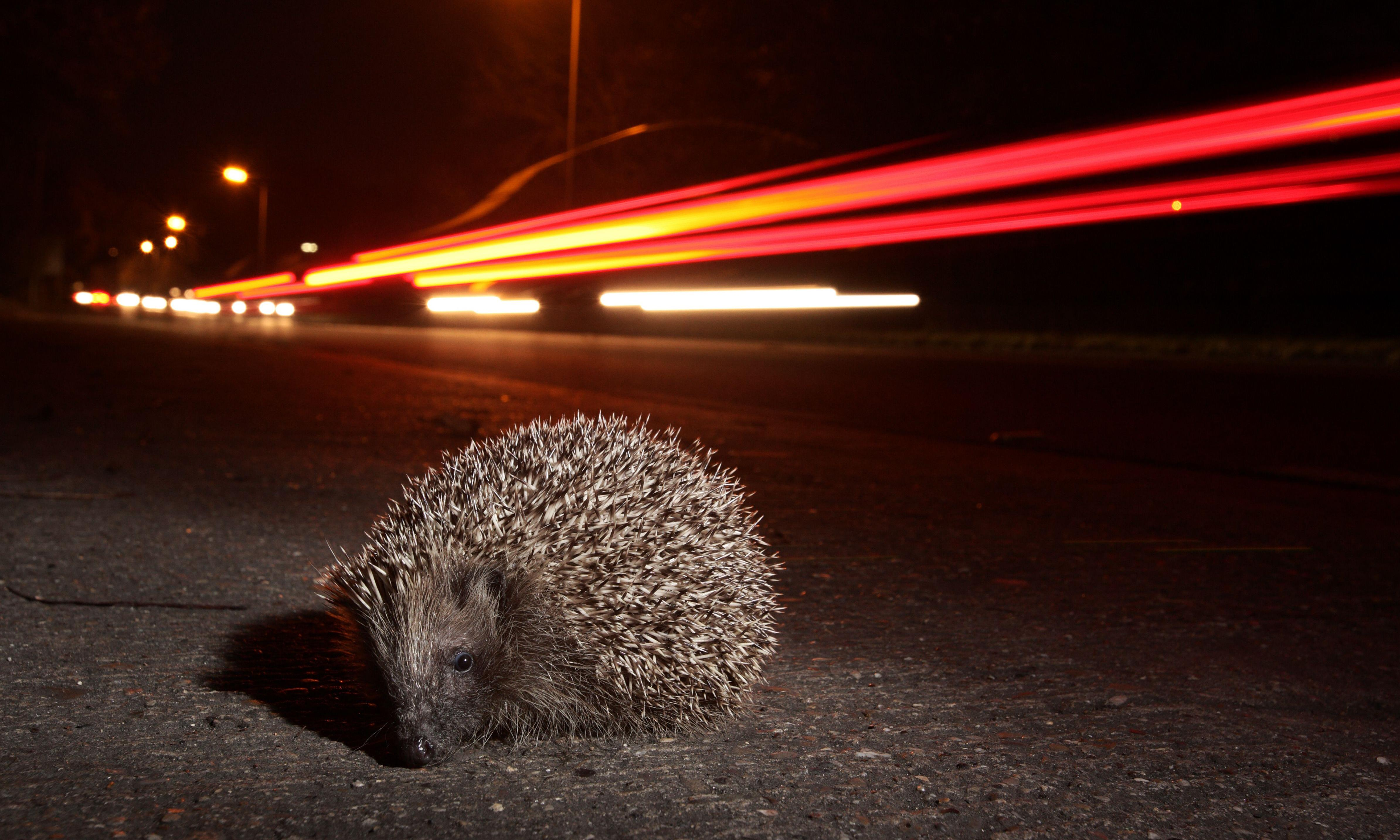 Hedgehogs ahead! New sign warns drivers of animals on roads