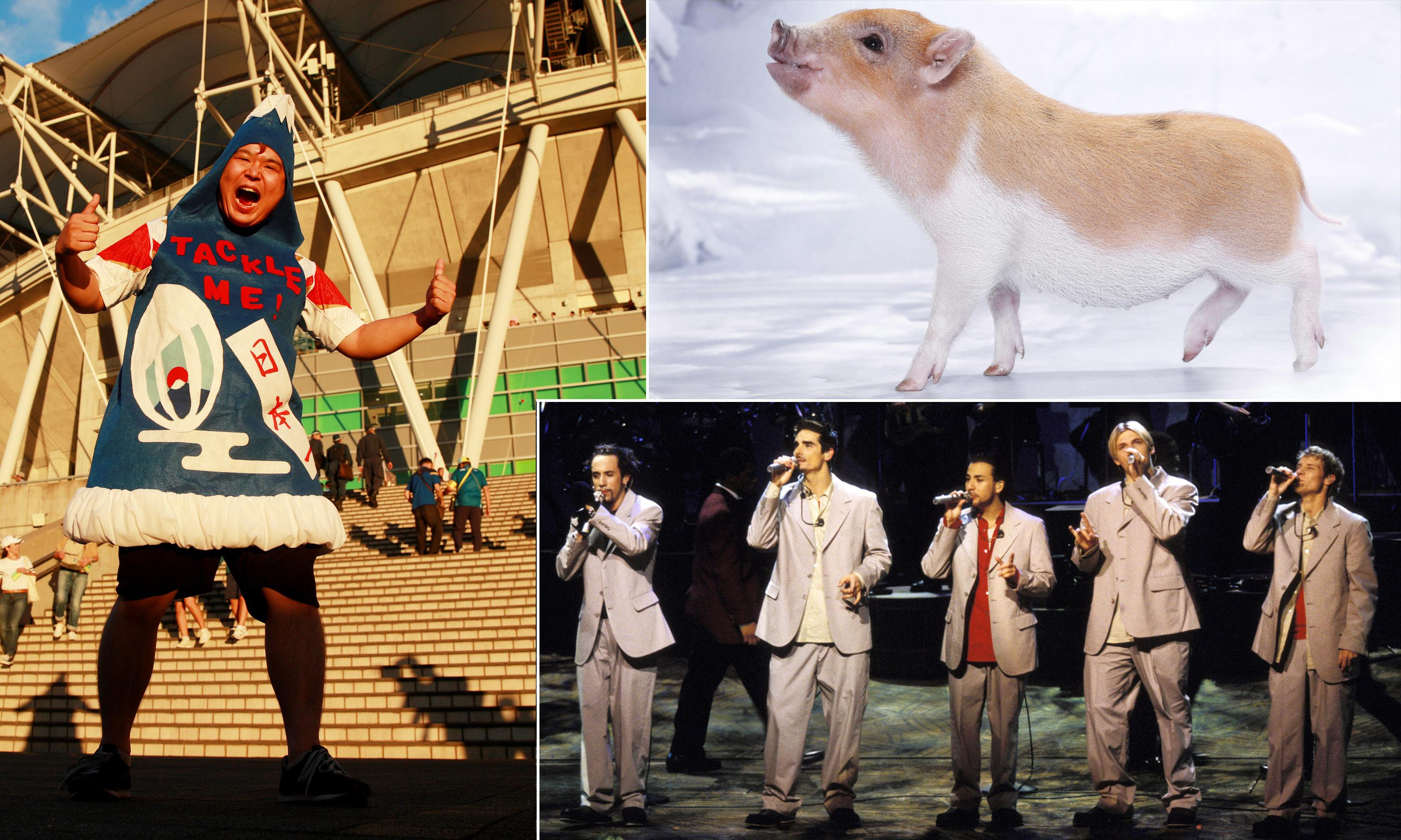 Tales from Tokyo: micropig cafes, karaoke regrets and 500,000 fans having fun