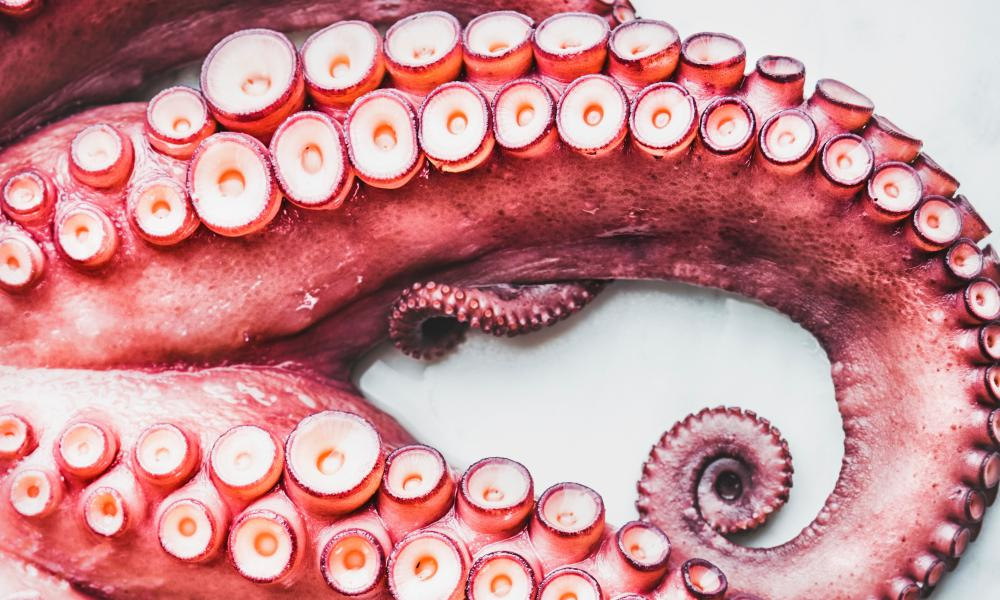 No everyone is a sucker for Octopus.