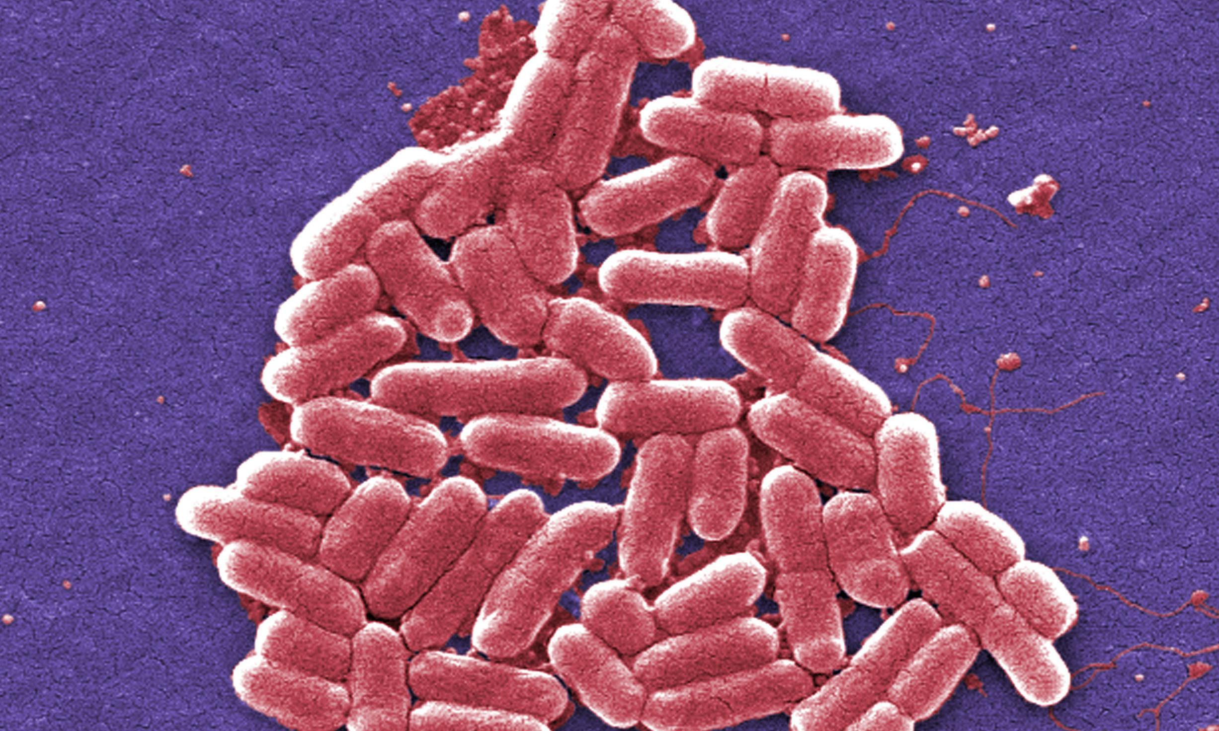 'Living medicine' helps make toxic ammonia breakthrough