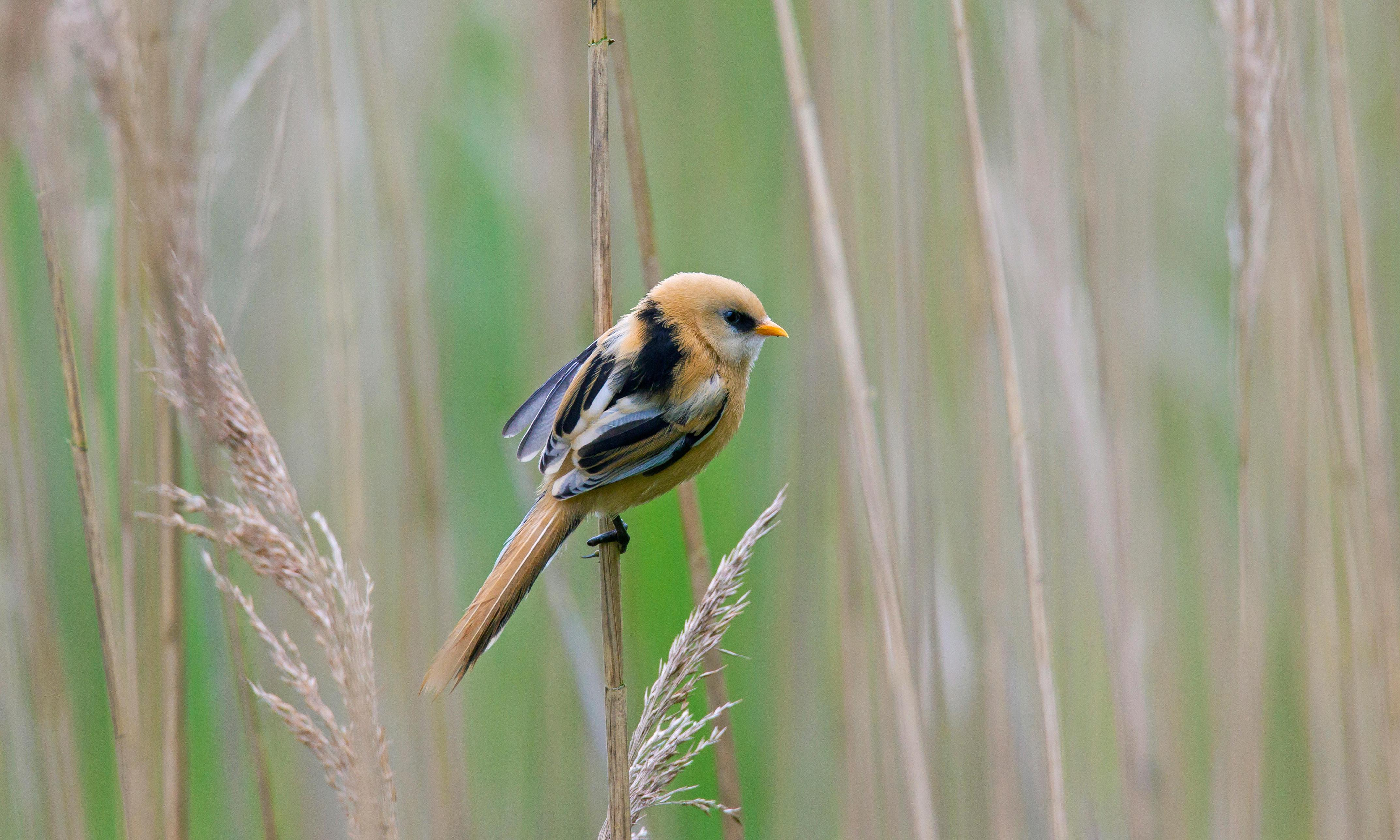 'Land sparing' on farms could revitalise UK bird populations, study says