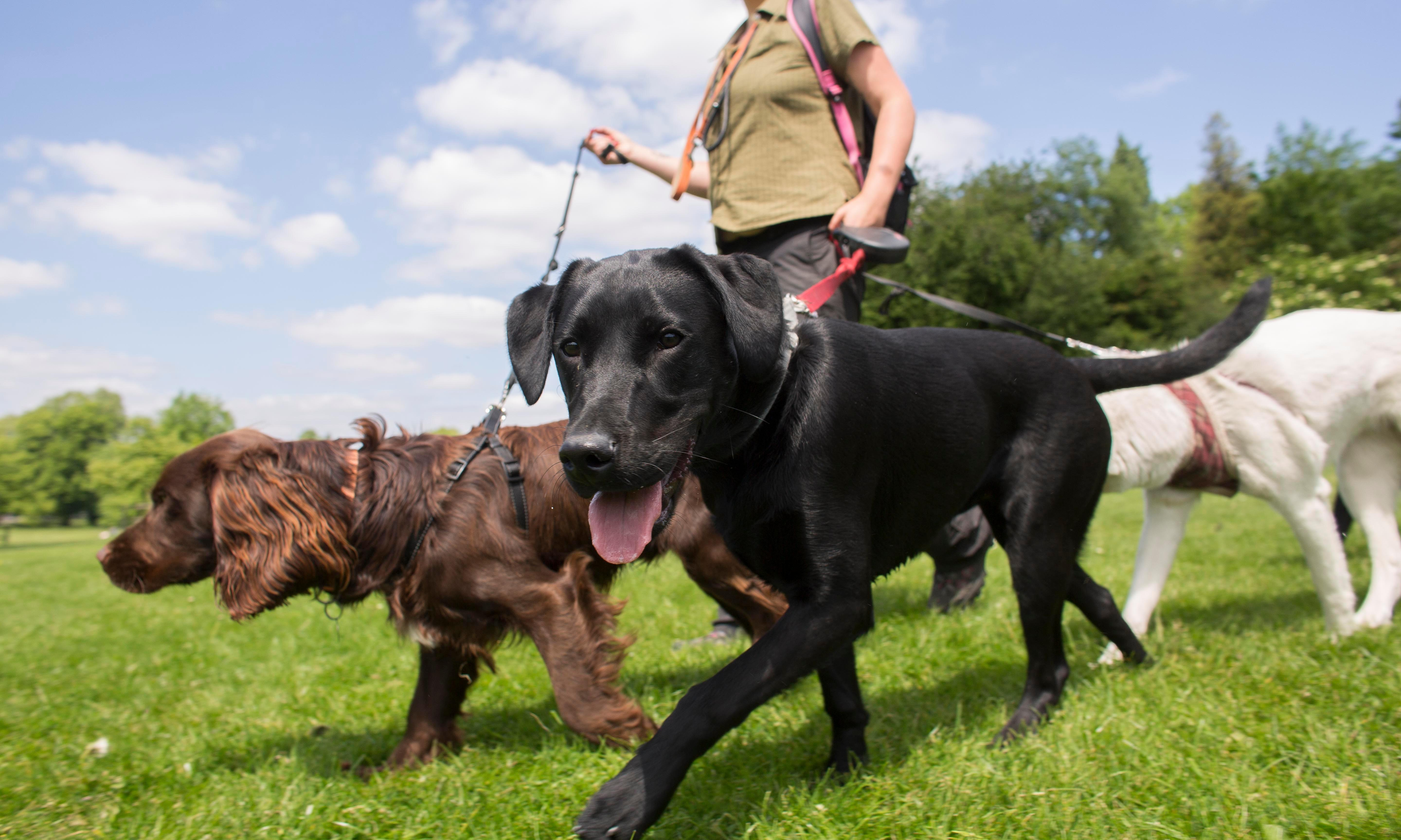 Pets at Home buys stake in dog-walking service Tailster