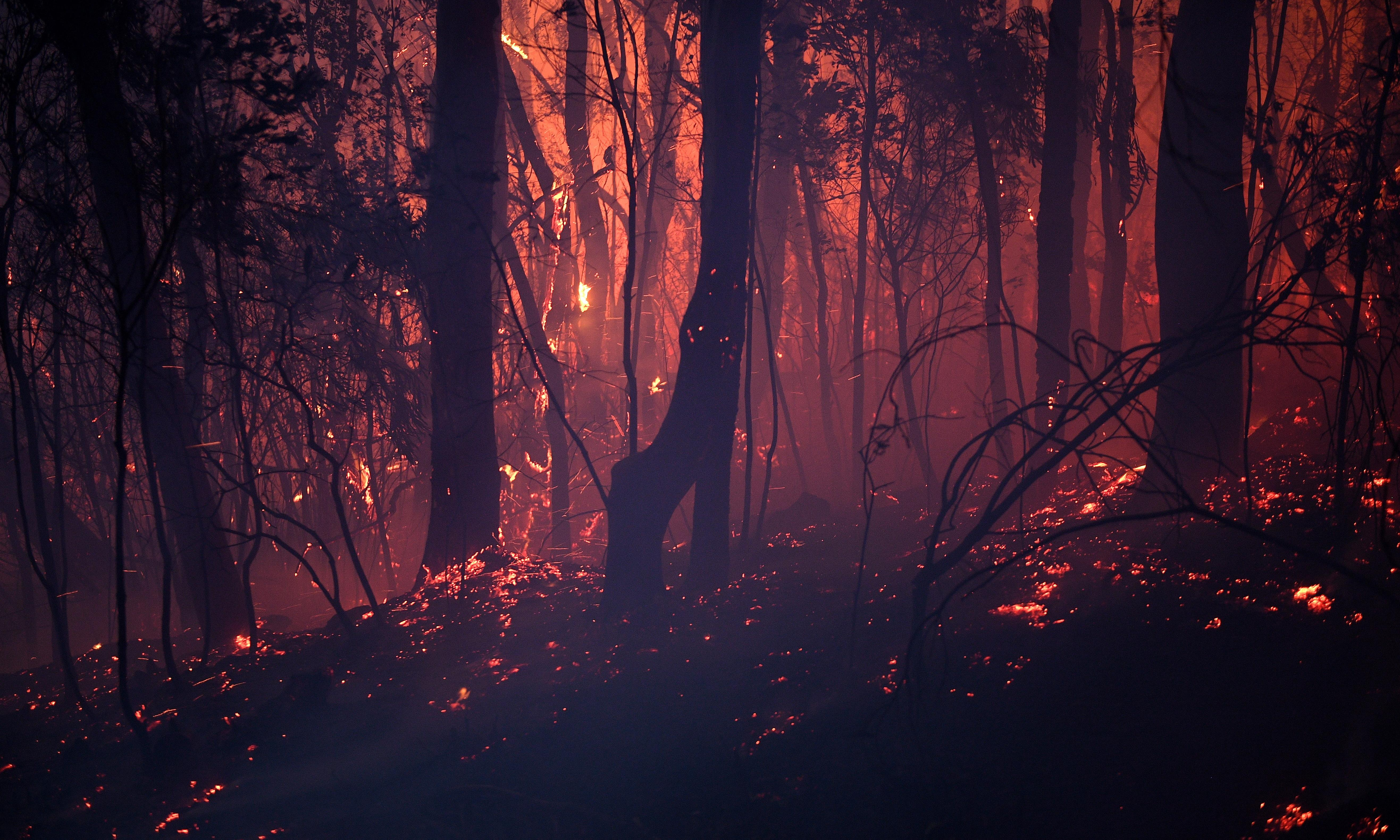 NSW and Queensland bushfires: at least 100 homes destroyed, three people missing