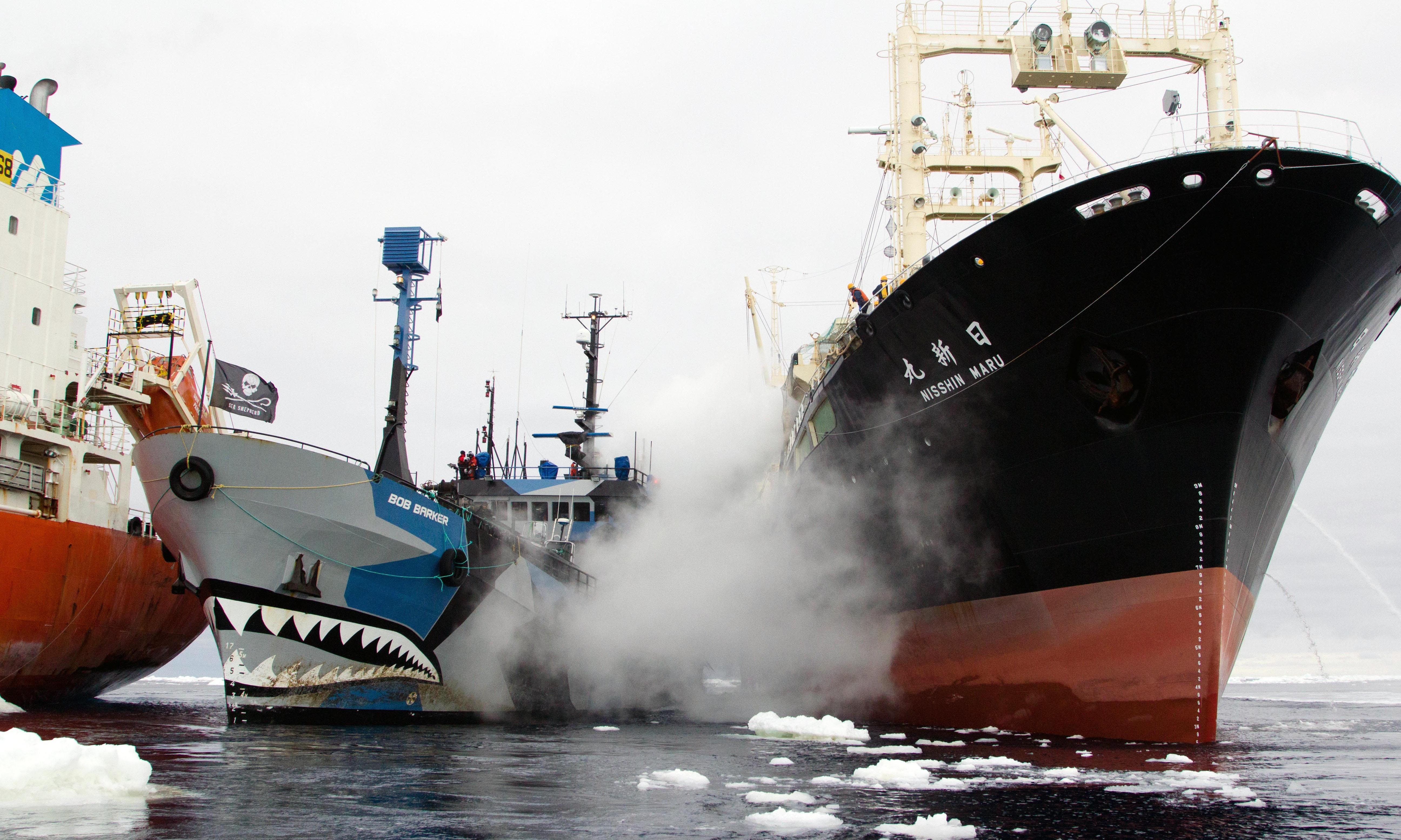 Sea Shepherd Captain Paul Watson: 'I call what we do aggressive non-violence'