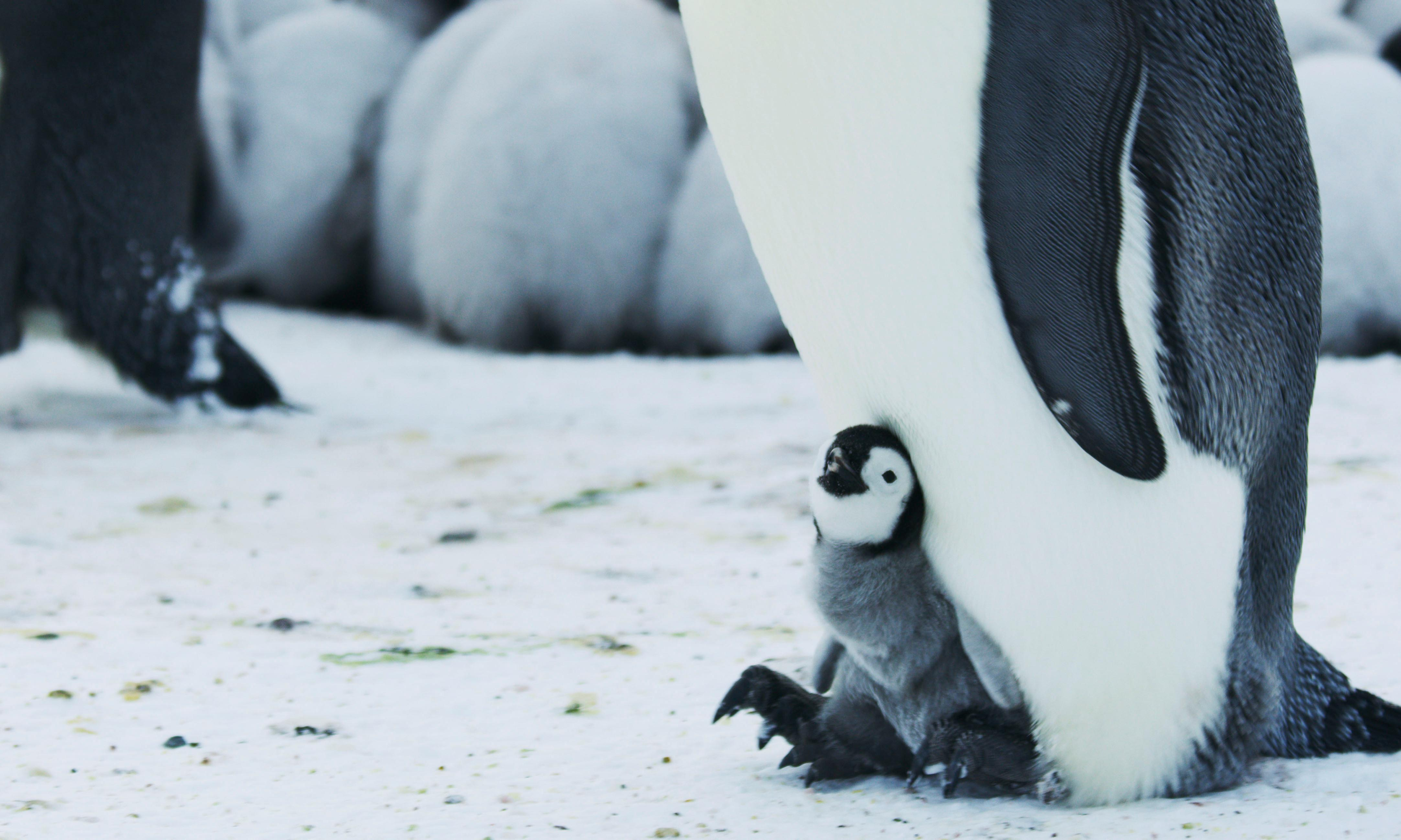 TV tonight: a breathtaking view of our planet, penguin poo and all