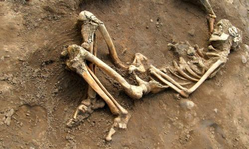 The stories of Roman lives are written their bones: Roman skeleton found on at York University campus.