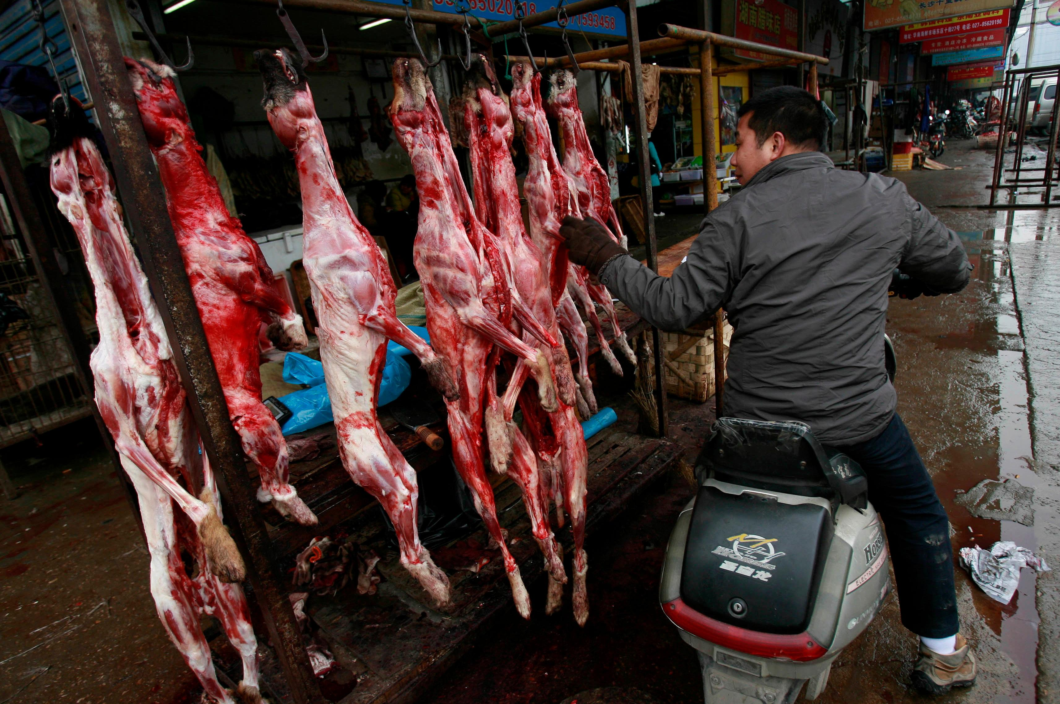 Shenzhen could be first city in China to ban eating of dogs and cats