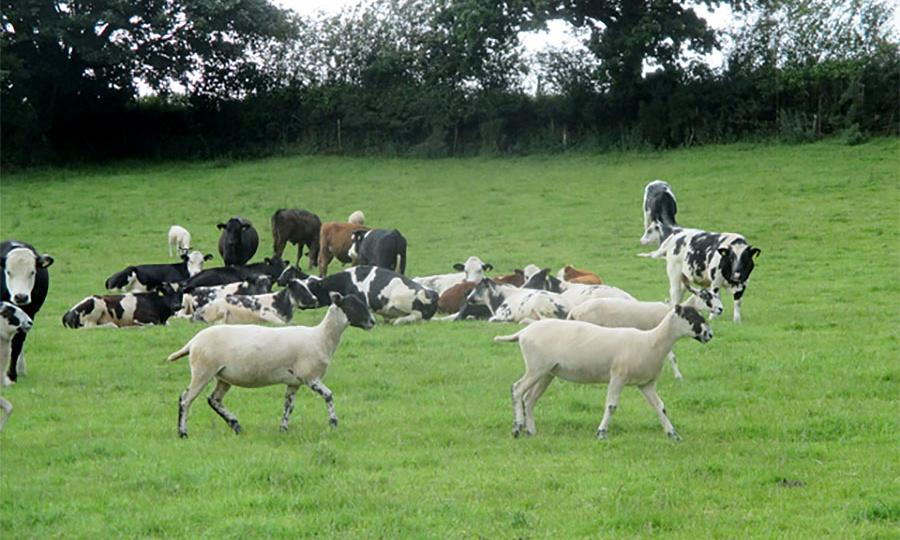 Country diary: recent downpours have revived the pastures