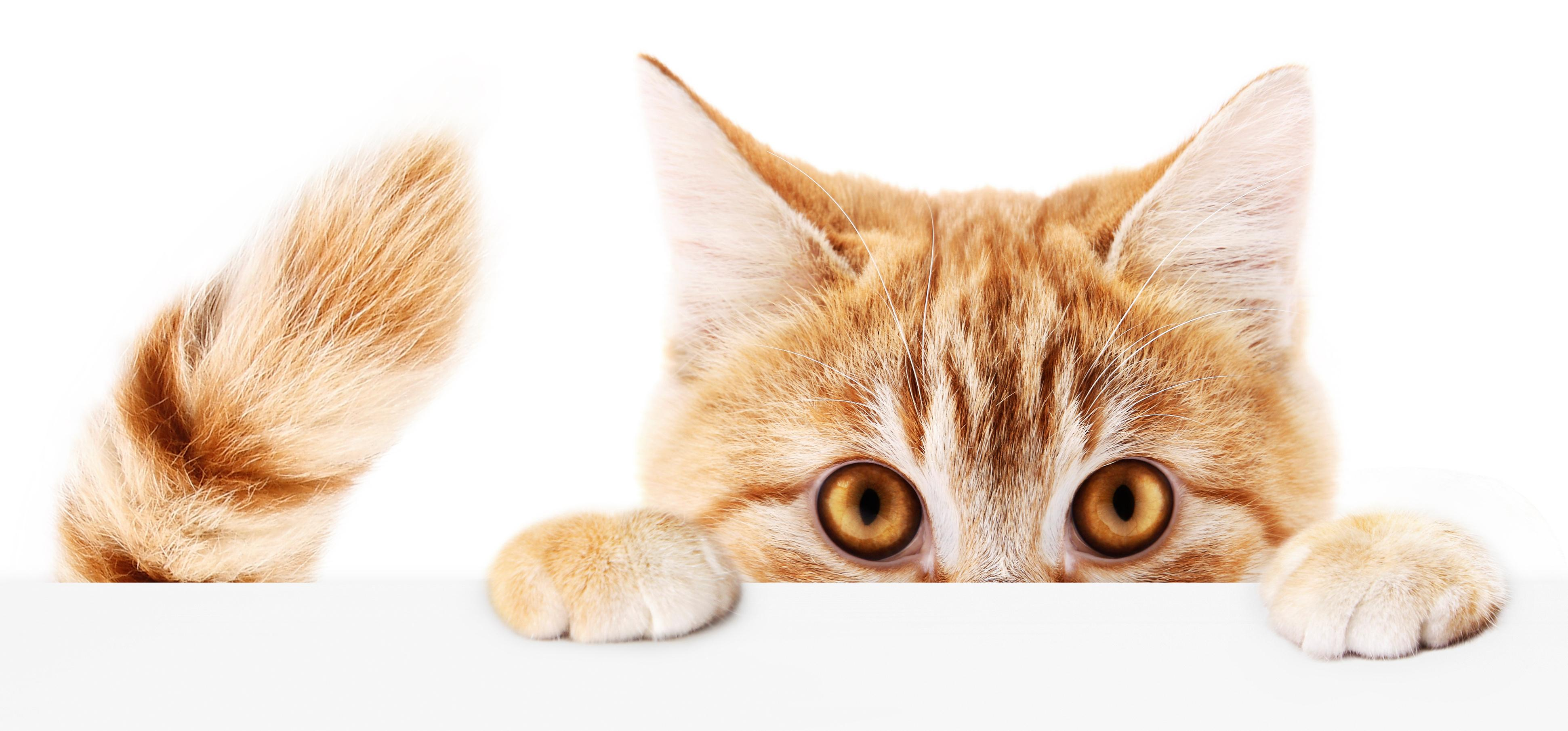 Which composer was accused of being a cat killer? The Weekend quiz
