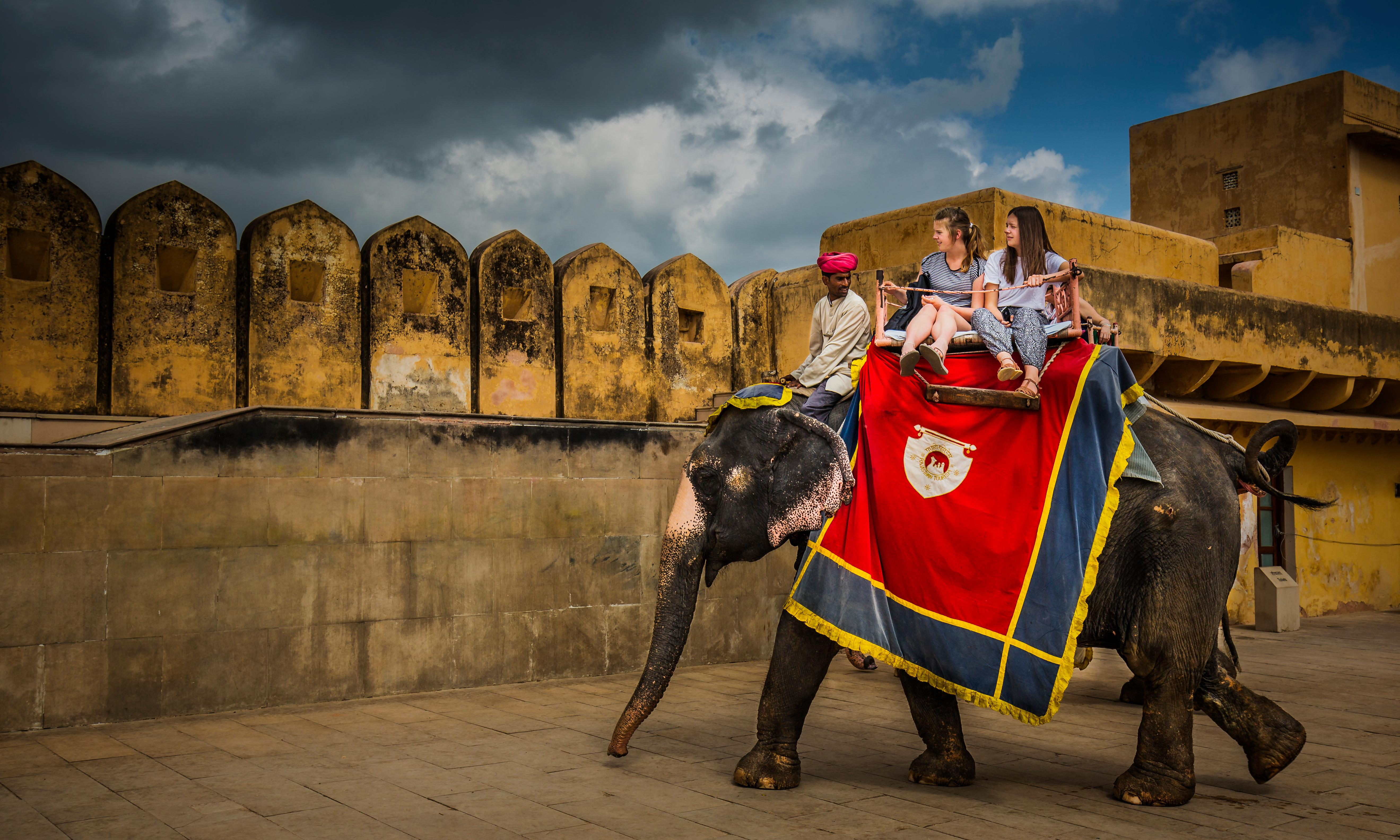 Jaipur protest demands end to use of elephants to carry tourists