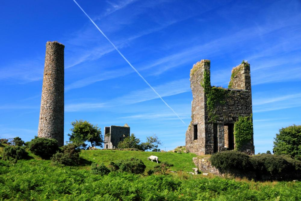 Sheep graze by the ruins of mine buildings at Caradon Hill, near Minions, Cornwall..