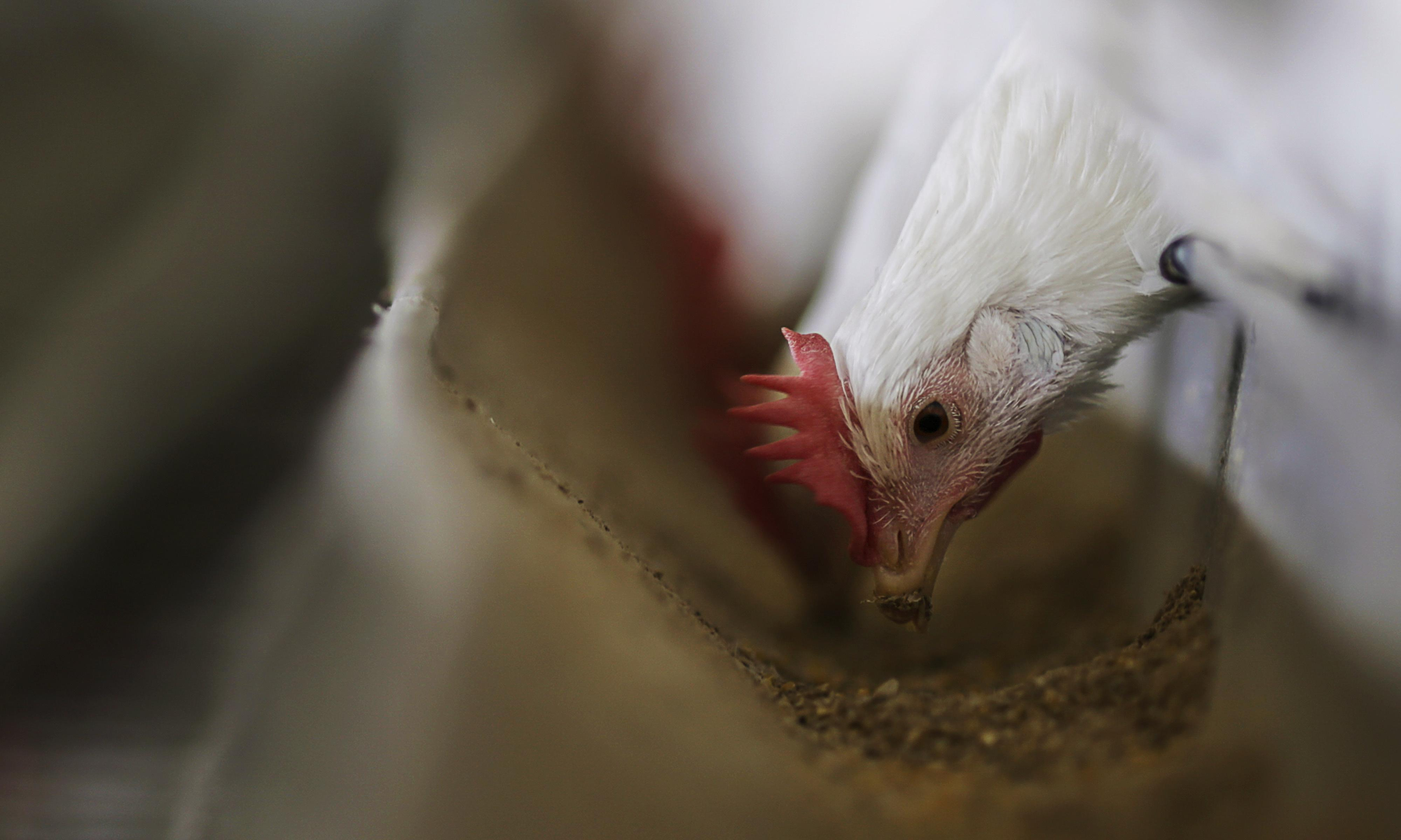 Retailers move to reassure consumers over chicken safety after drug seizure