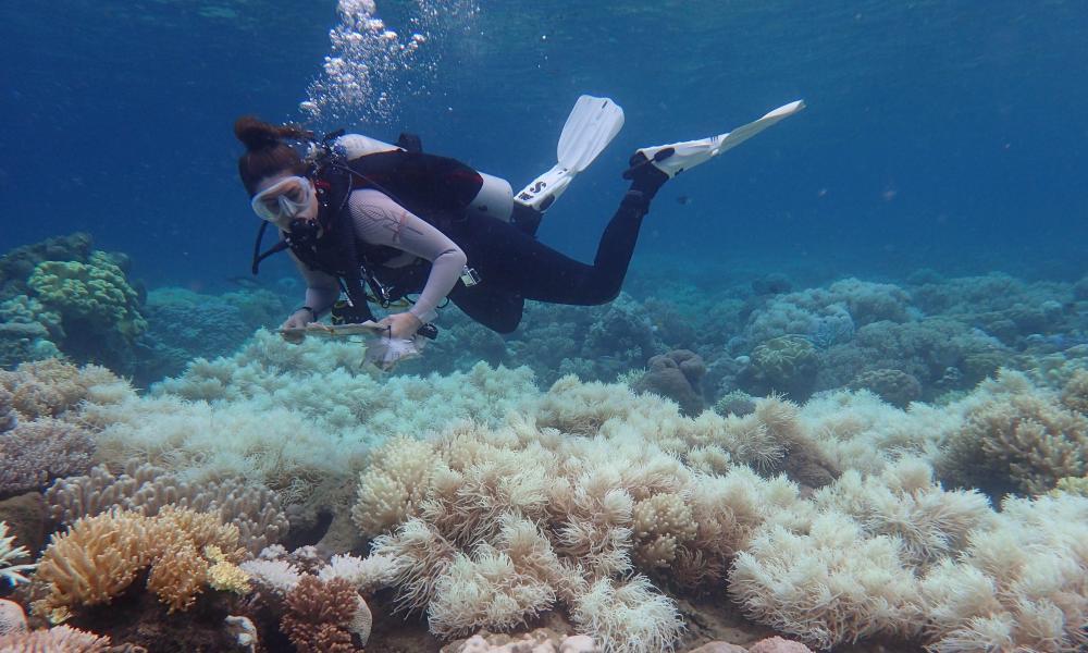 Great Barrier Reef coral bleaching