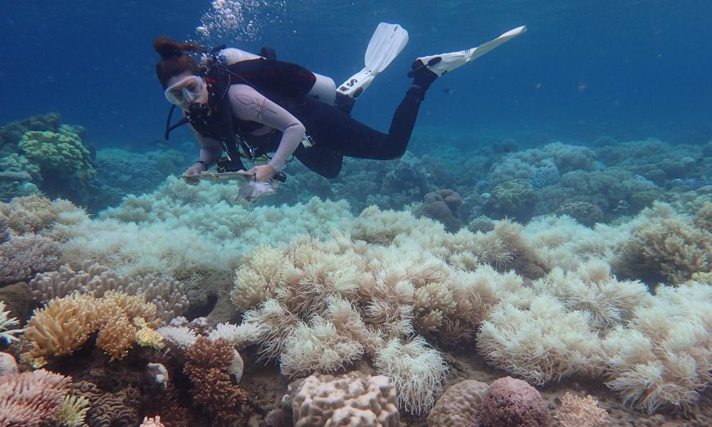 Bleaching damage on the corals of the Great Barrier Reef, Queensland, Australia.