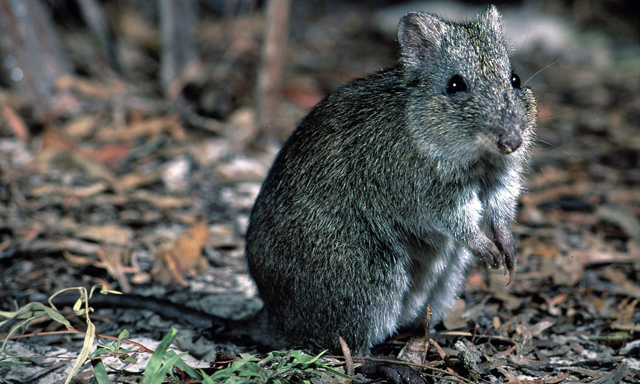 'No clue': environment department doesn't know if threatened species plans implemented