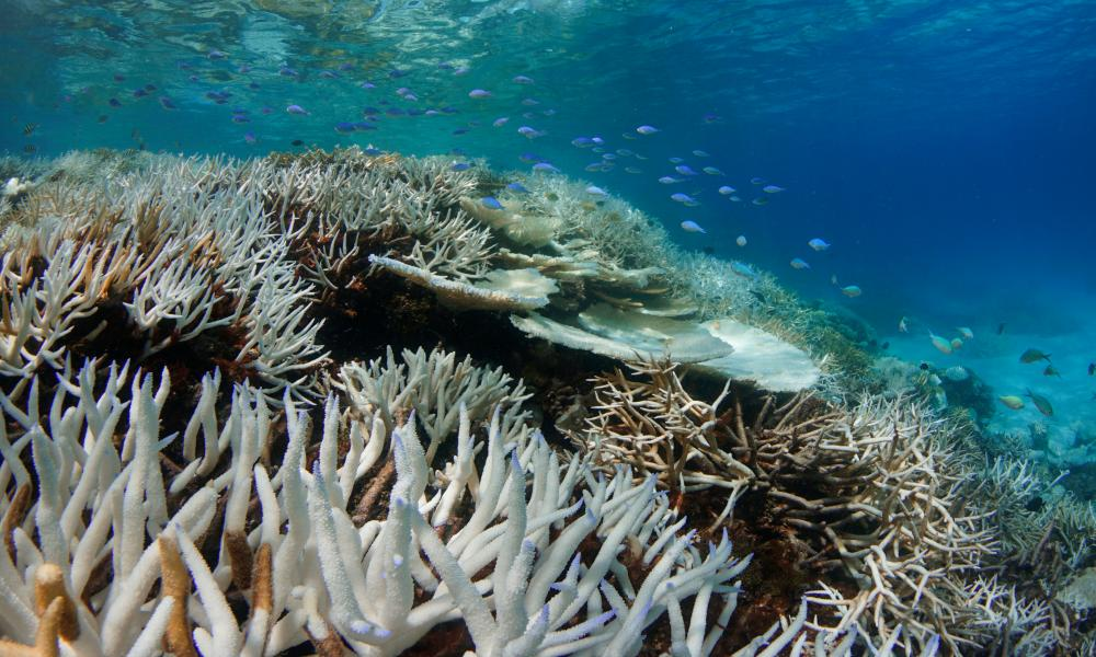 Coral bleaching in the Maldives.