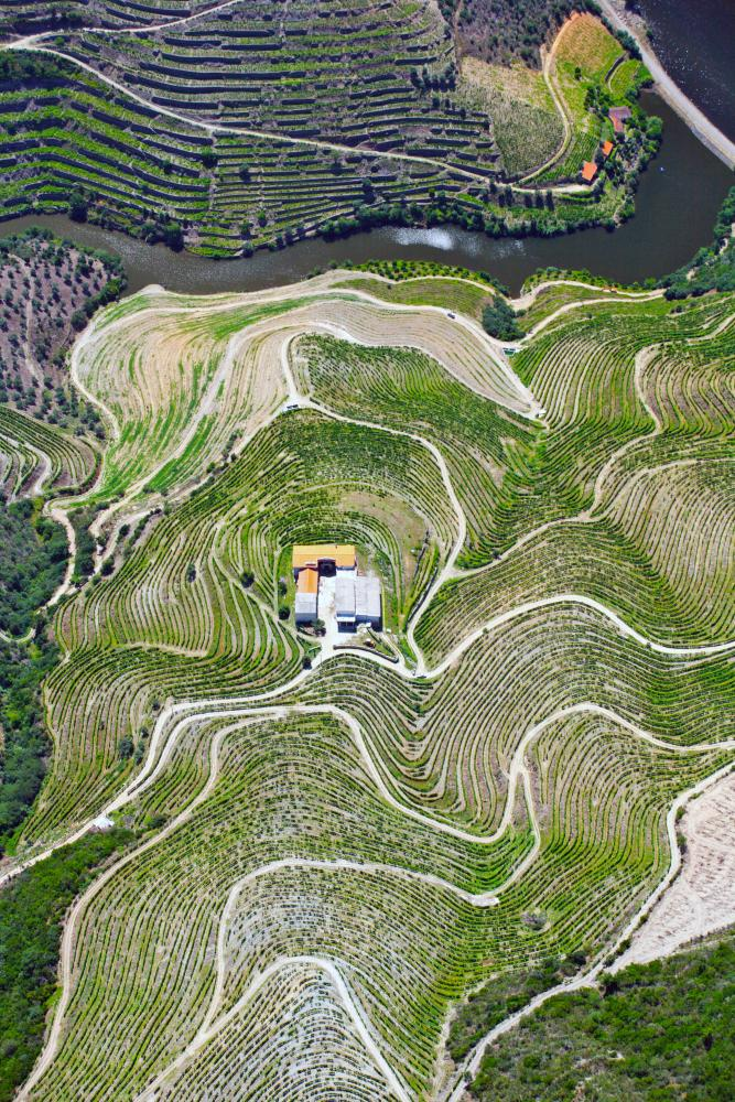 Aerial view of vineyard terraces and the Douro river in the Alto Douro region