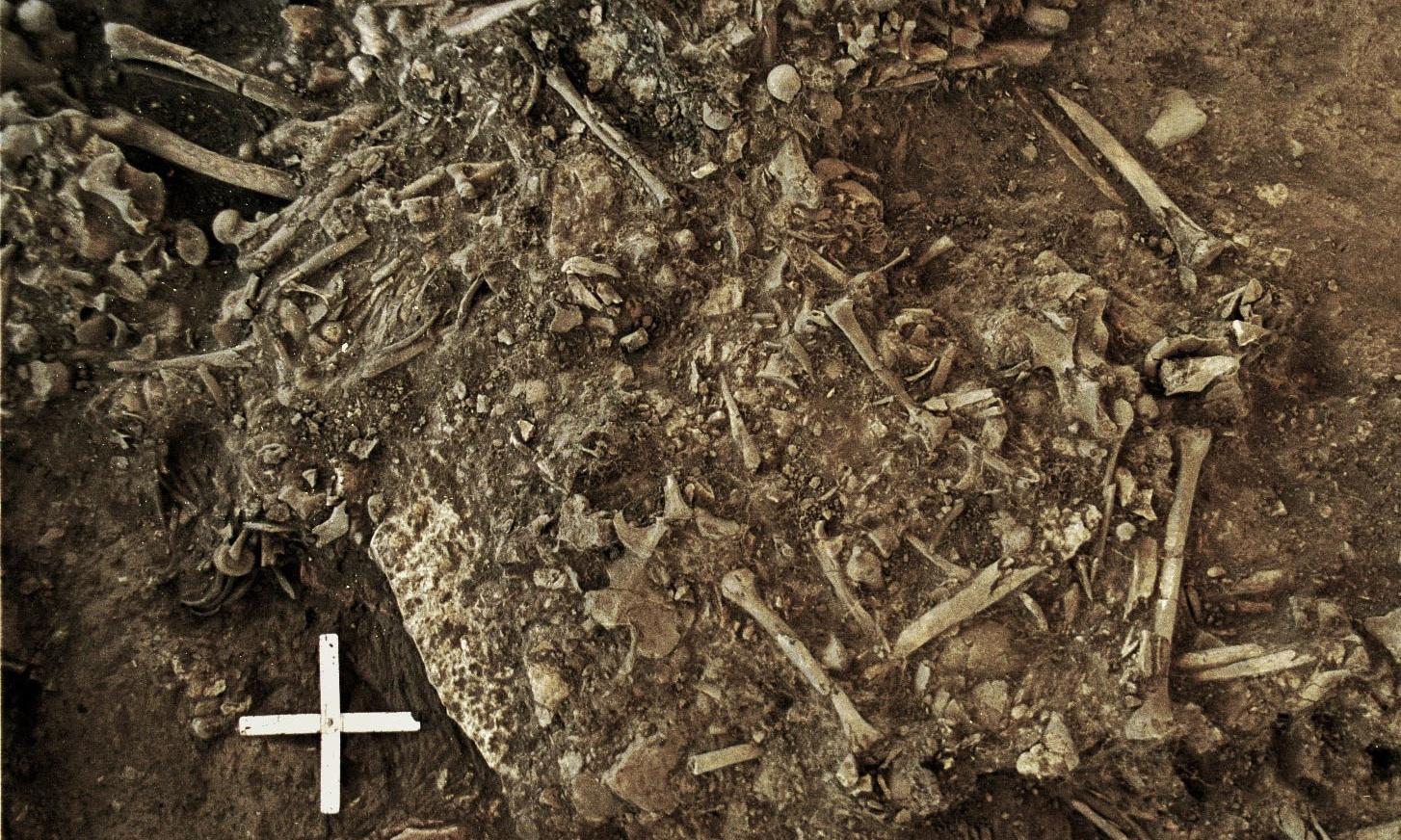 Earliest plague strain found in Sweden holds clue to stone age migration from east