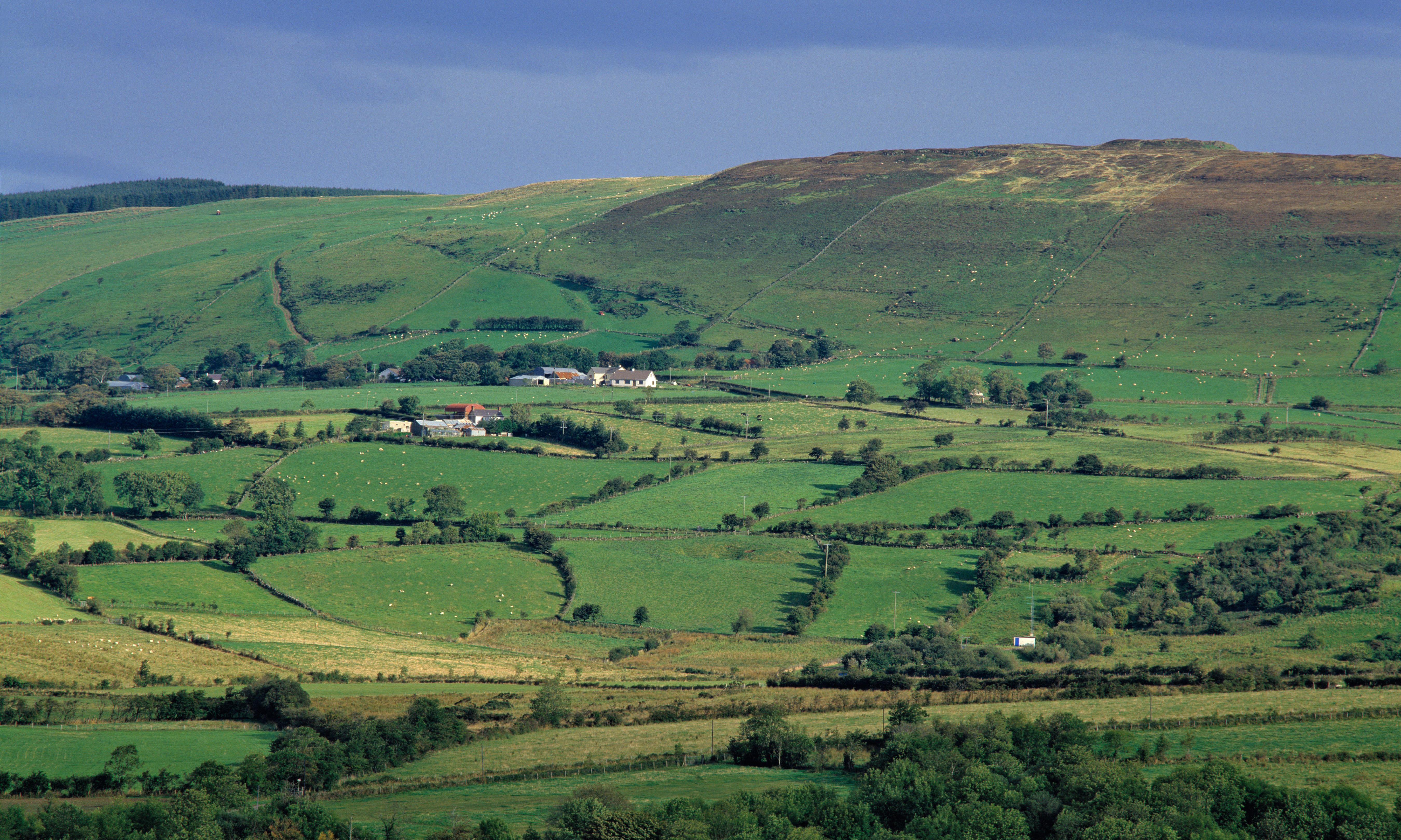 Green energy subsidies fuel rise of Northern Ireland mega-farms
