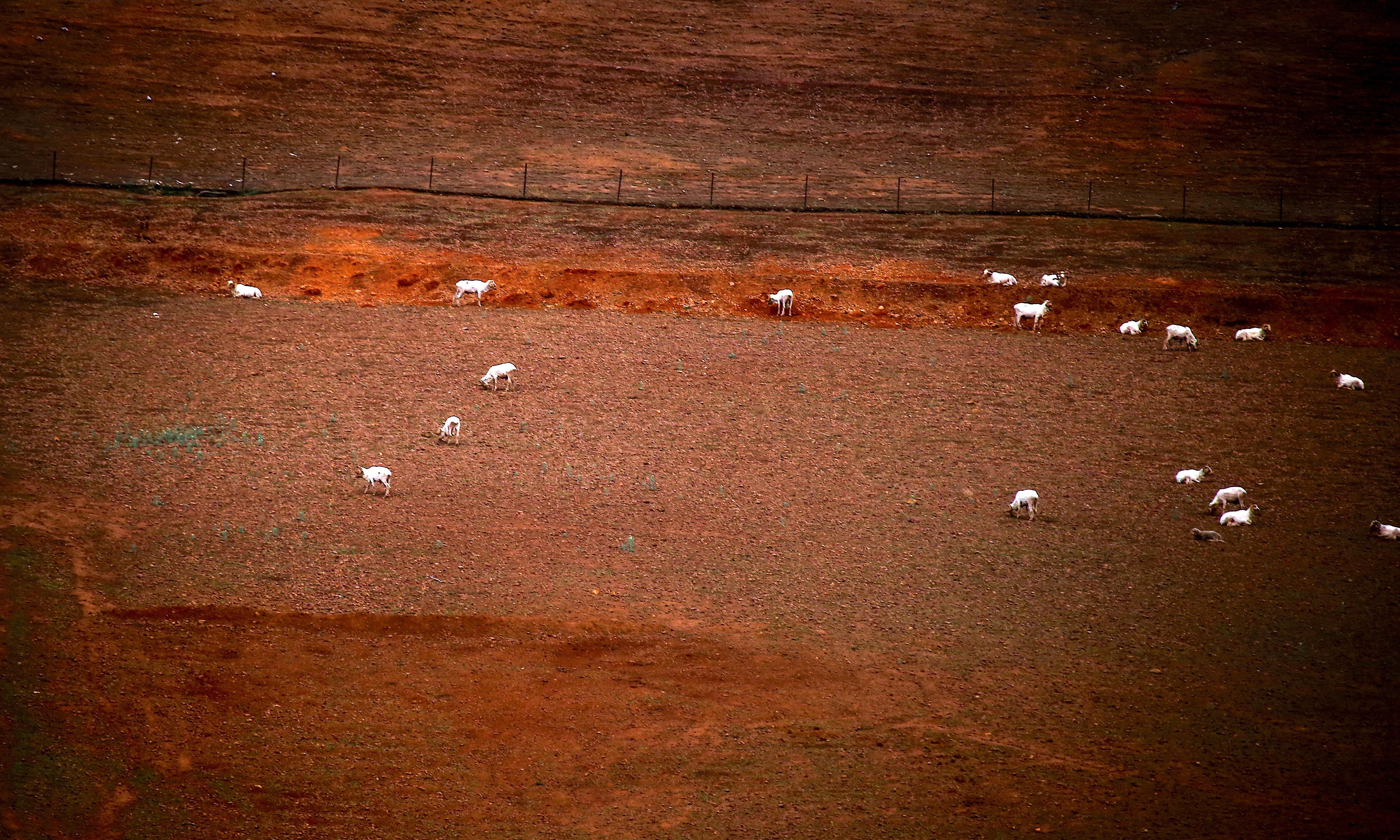 Boris Johnson and the Australian drought: democracy is not idiot proof