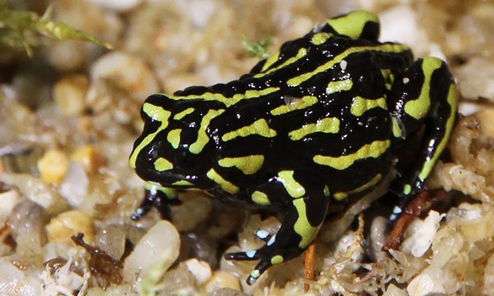 Threatened species inquiry told public servants think Australia is failing