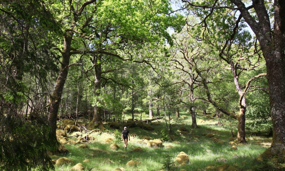 Ariundle Oakwood, Highland.