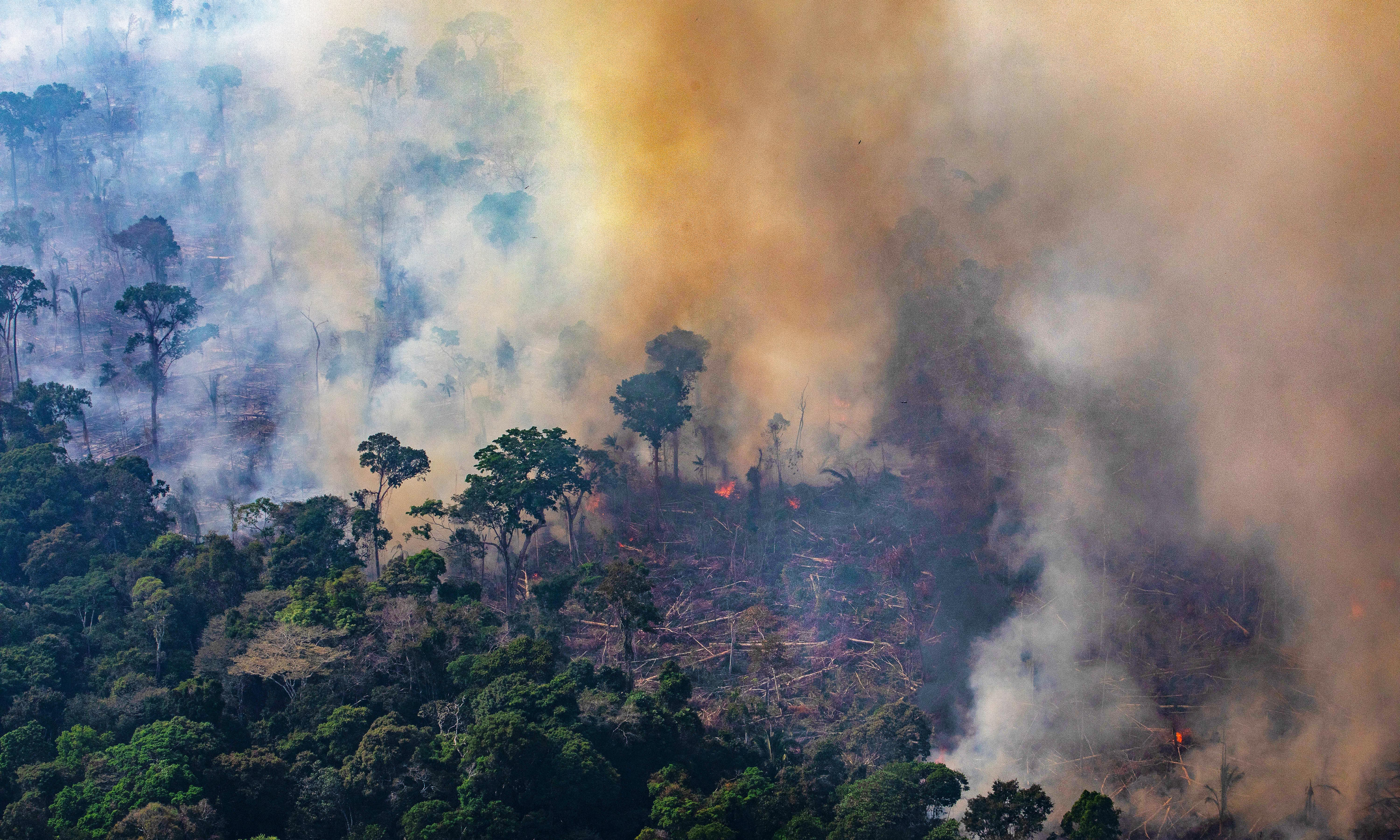 The Amazon: on the frontline of a global battle to tackle the climate crisis
