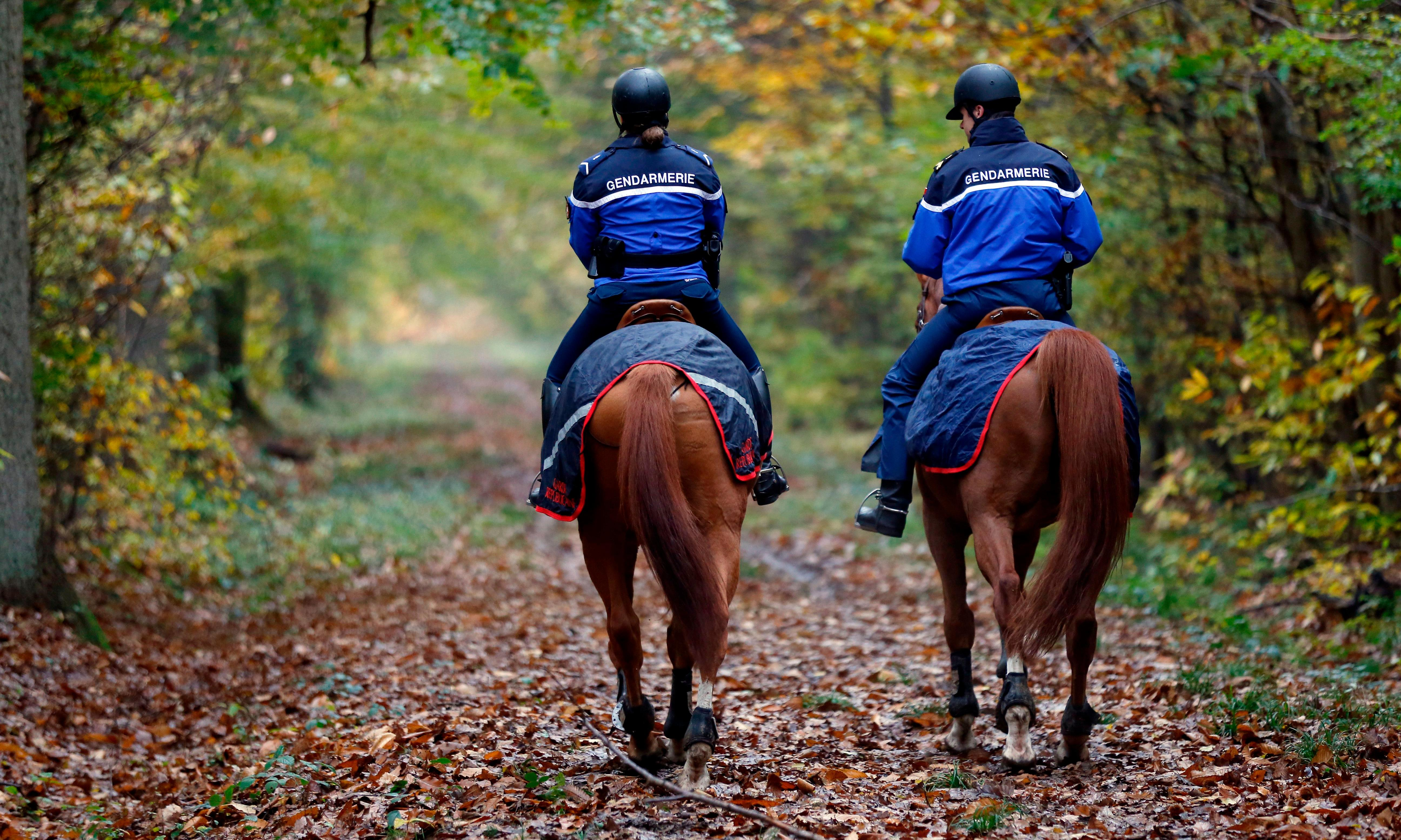 France: pregnant woman killed by dogs during hunt with hounds